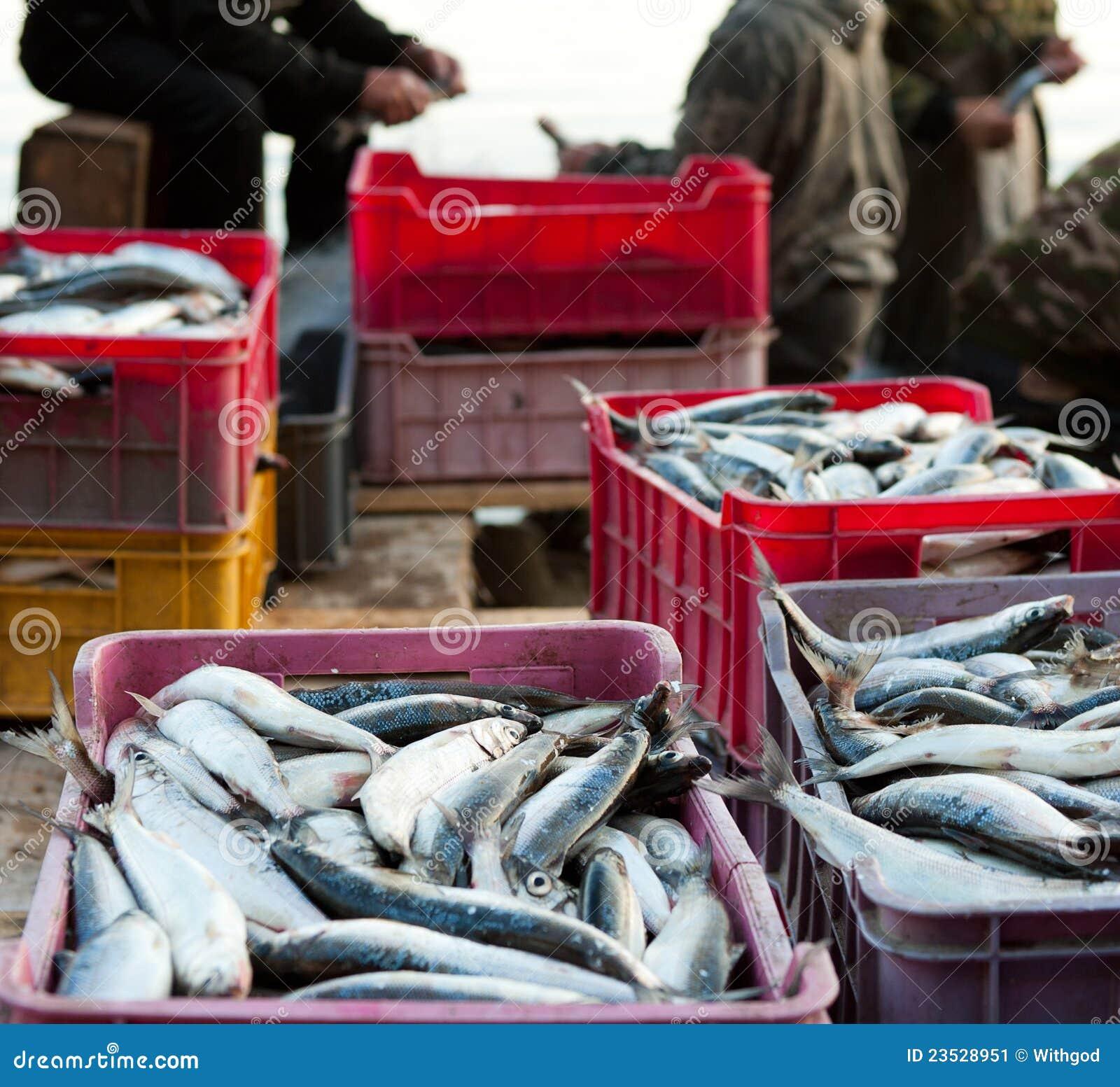 Bon loquet des poissons