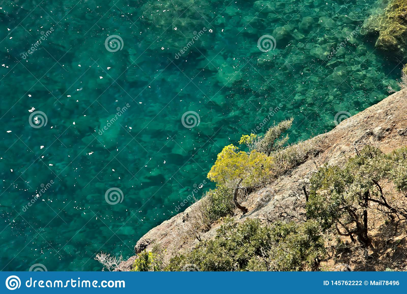 Bonassola, cerca de Cinque Terre Una peque?a planta del pino en los acantilados del mar