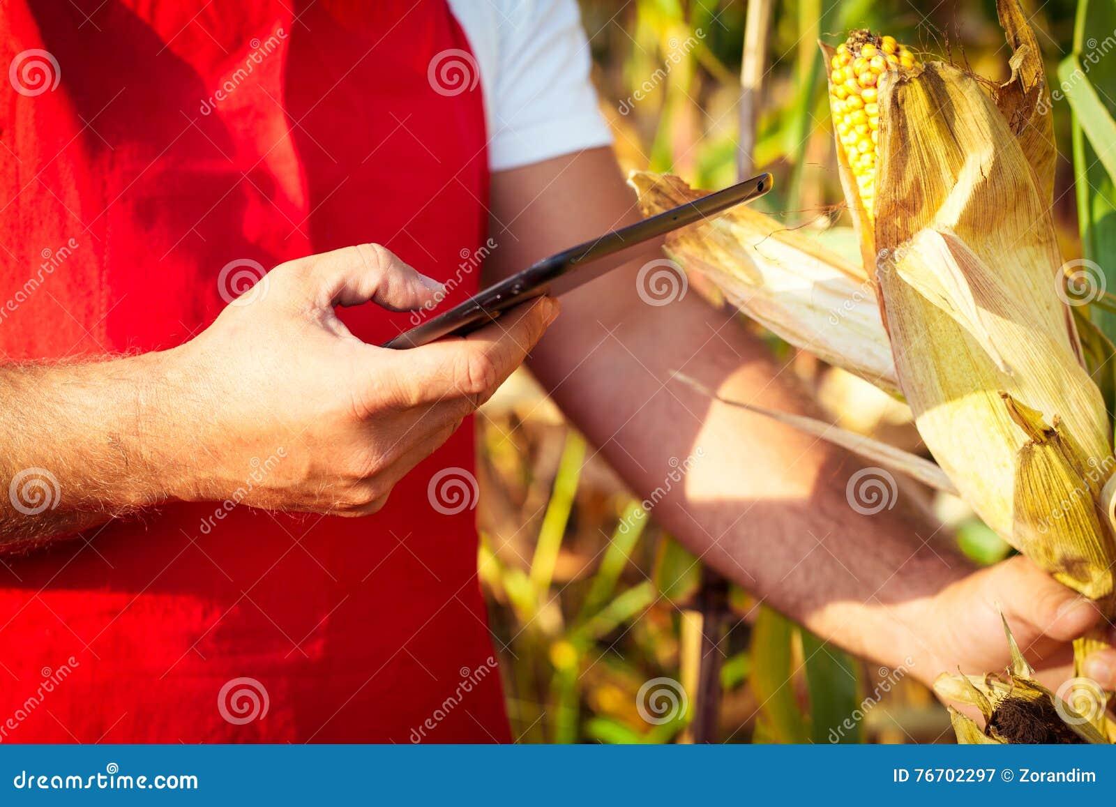 Bonde i cornfield genom att använda den elektroniska minnestavlan