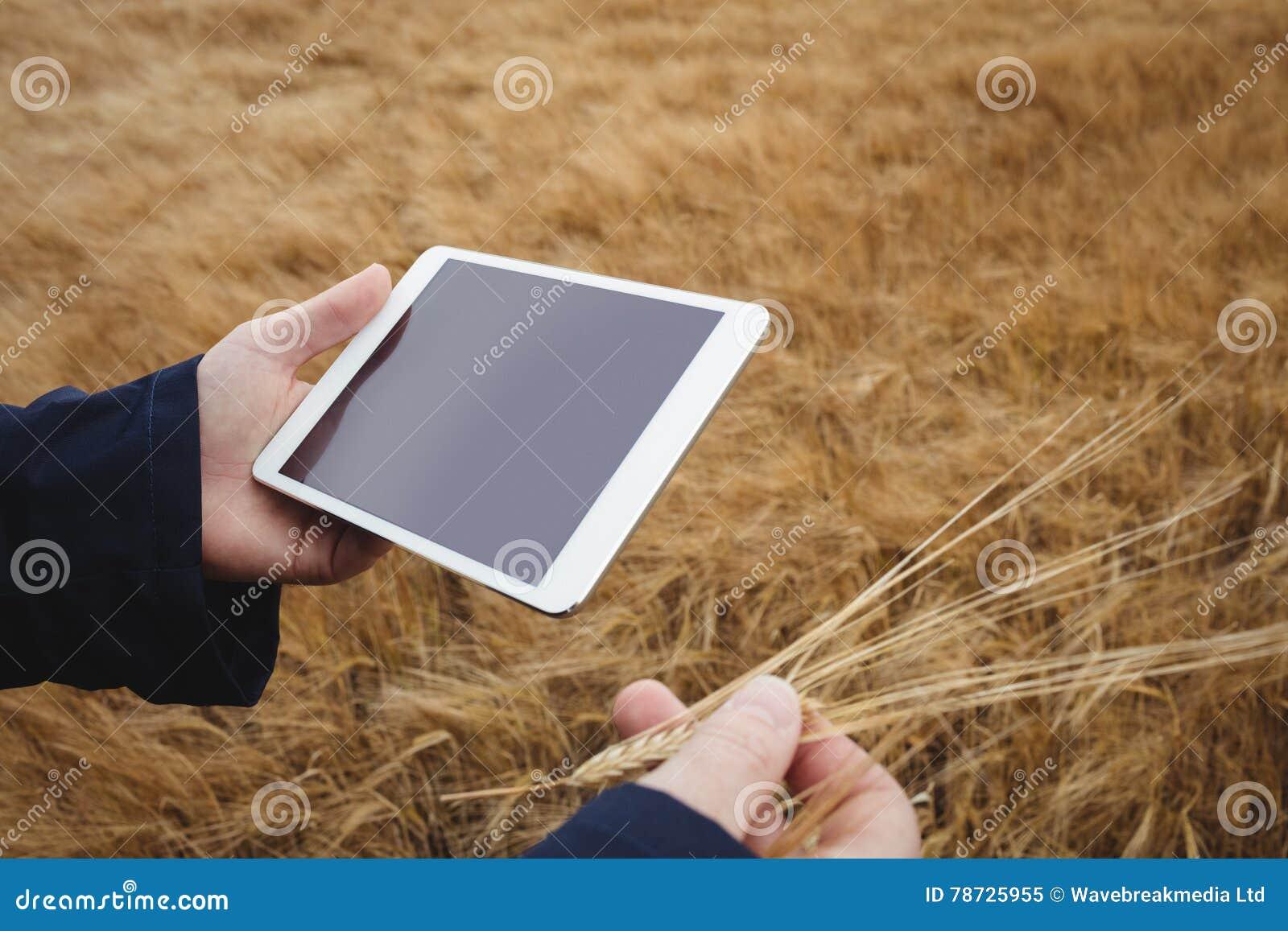 Bonde som använder den digitala minnestavlan, medan kontrollera öron av vete