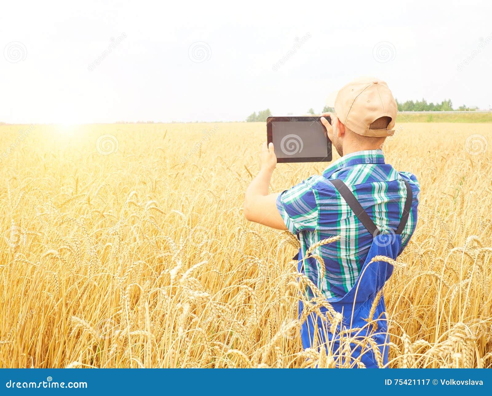 Bonde som fotograferar veteväxten i fält, genom att använda på minnestavlan Wh