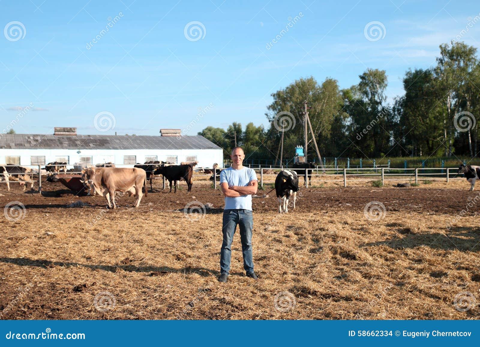 Bonden arbetar på lantgård med mejerikor