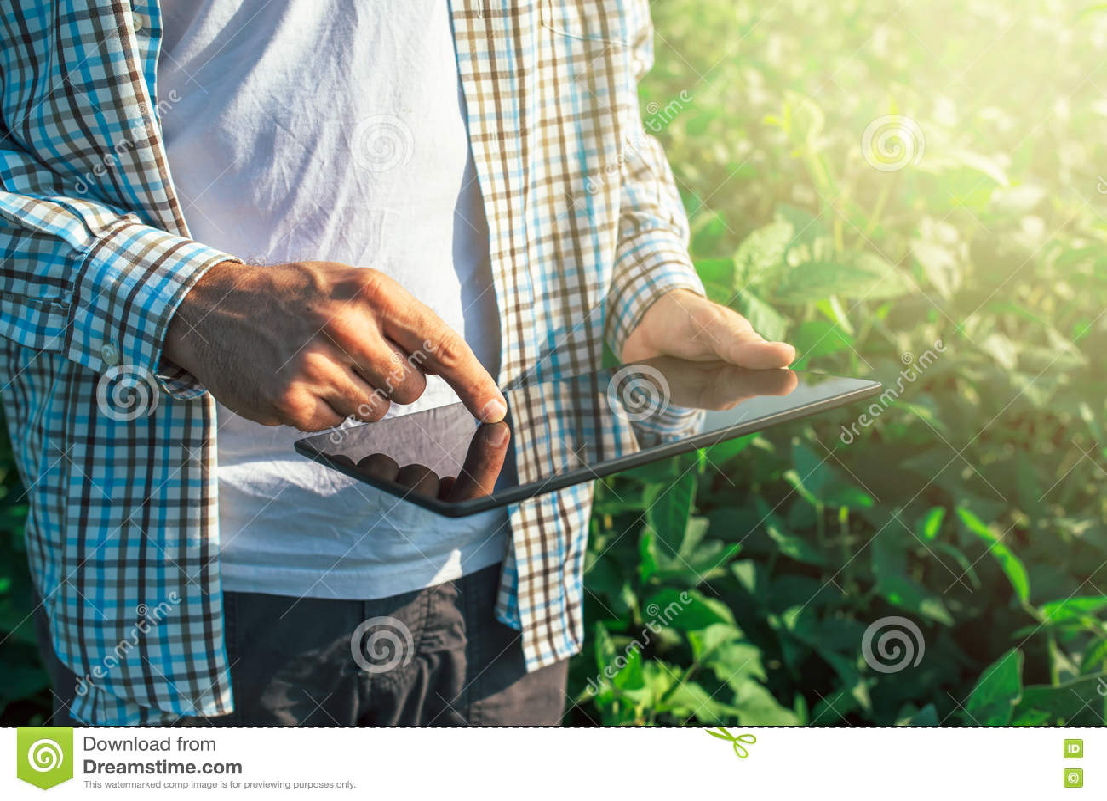 Bonden som använder den digitala minnestavladatoren i kultiverad sojaböna, kantjusterar