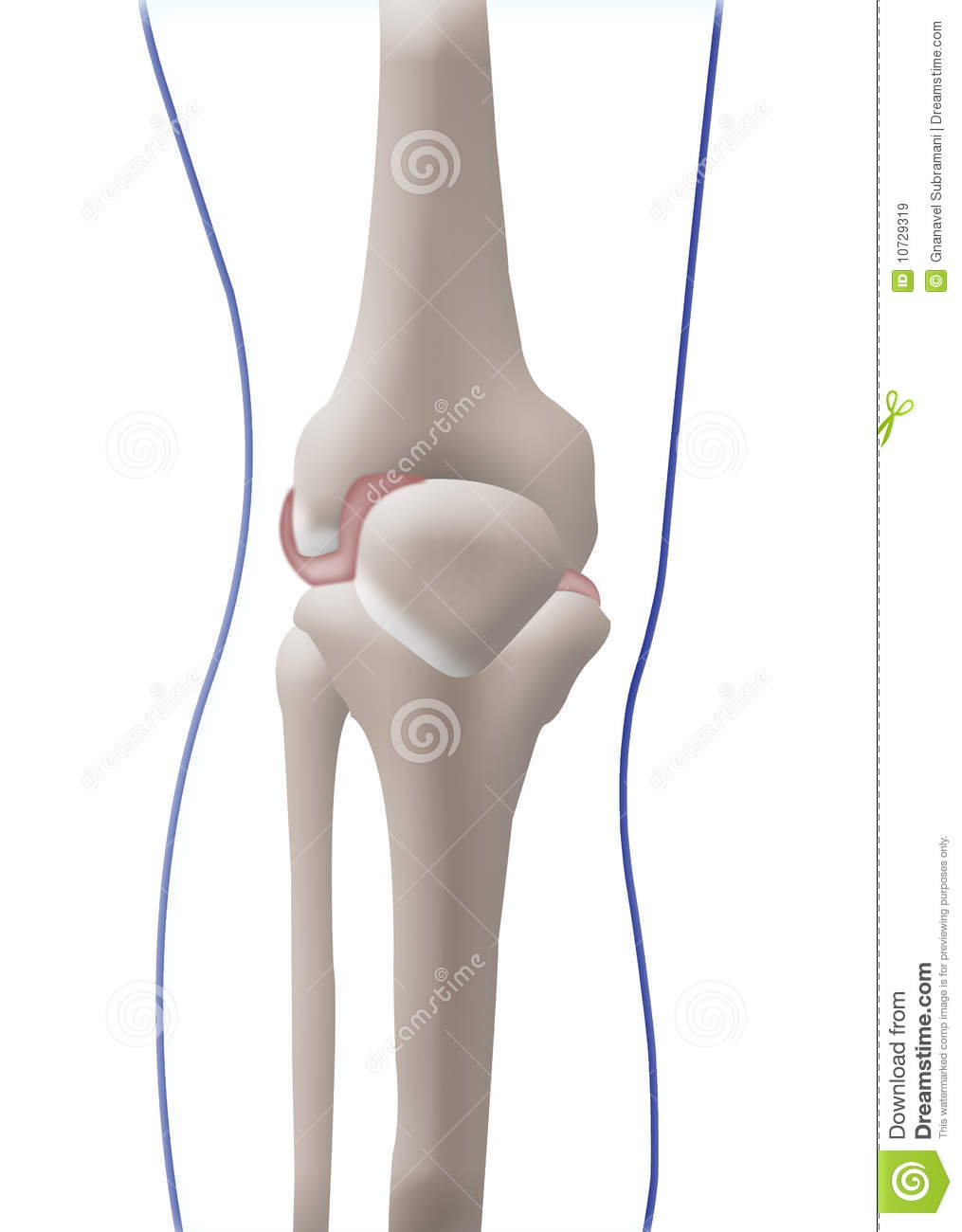 bone knee royalty free stock images image 10729319 bones clipart free bones clipart with black background