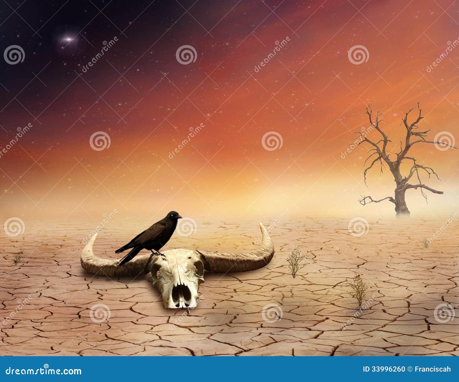 cow skull and desert - photo #20