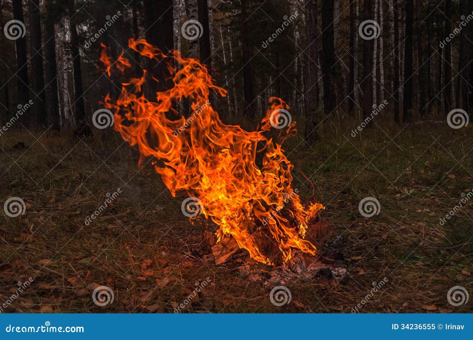 Fire flame bonfire forest autumn