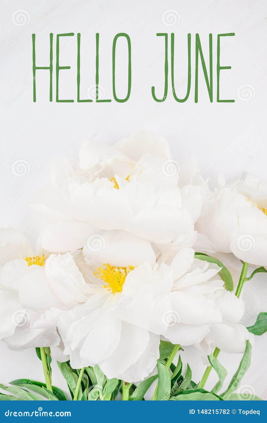 Bonjour Message De Juin Avec La Fleur Blanche De Pivoine