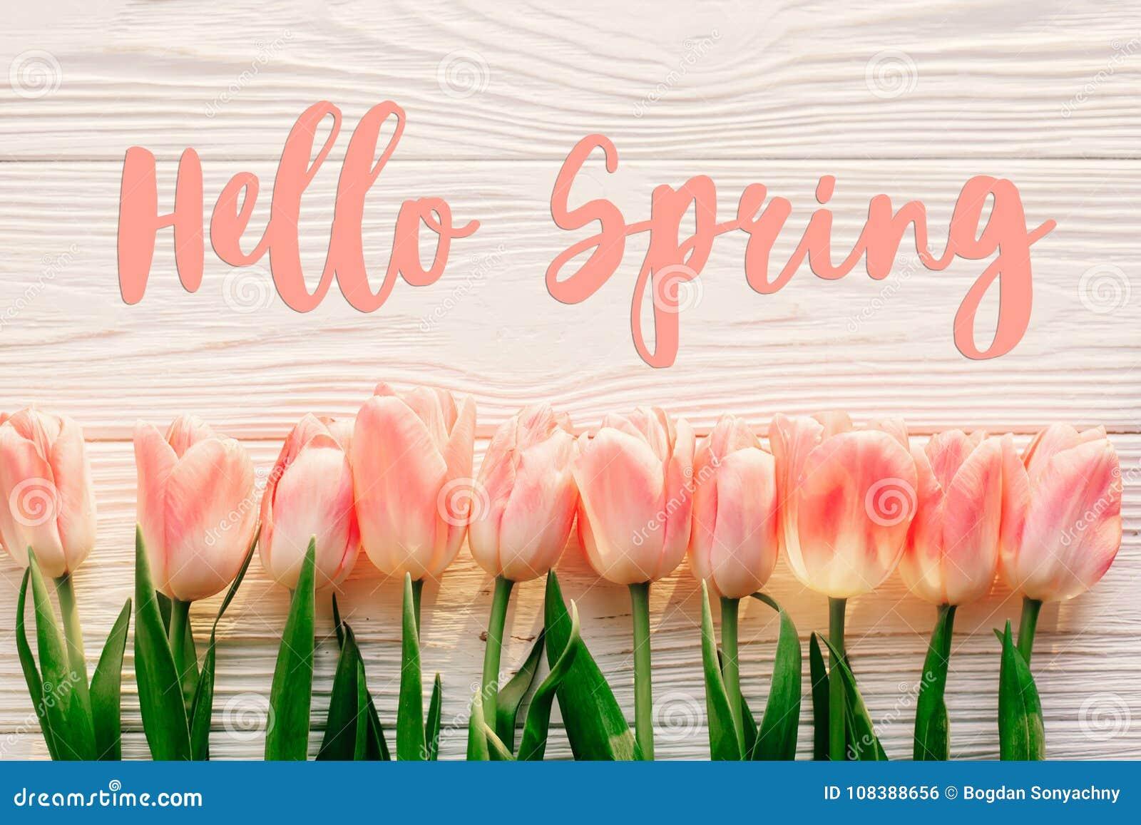 Bonjour signe des textes de ressort, belles tulipes roses sur l OE rustique blanc