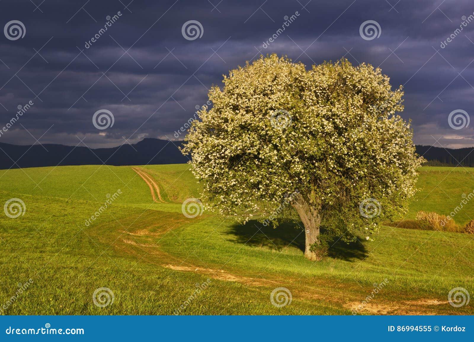 Bonkret łąki i drzewo