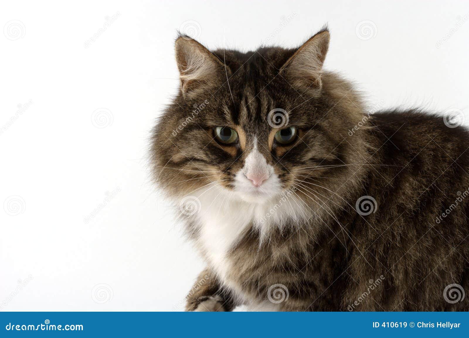 Bonnie el gato?