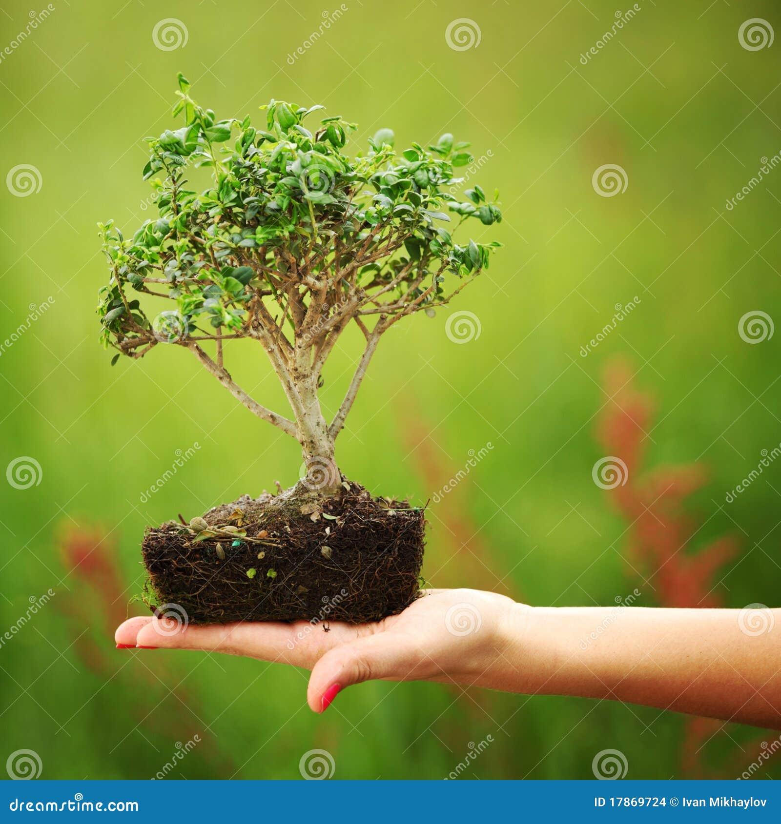 Земля для бонсай своими руками