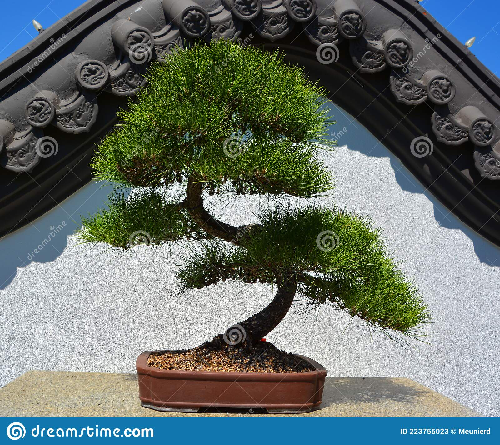 art form using small trees Bonsai. It Is An Asian Art Form Using Cultivation Techniques To