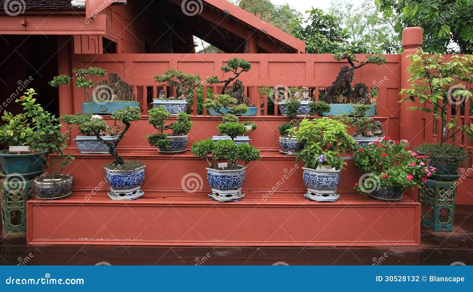 Bonsai on blue flower pots for decoration stock photo for Bonsai de jardin