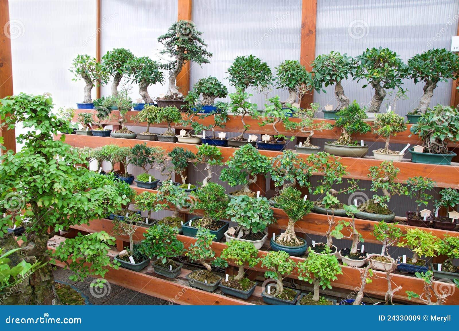 Bonsai collection stock image image of traditional flora for Bonsai de jardin