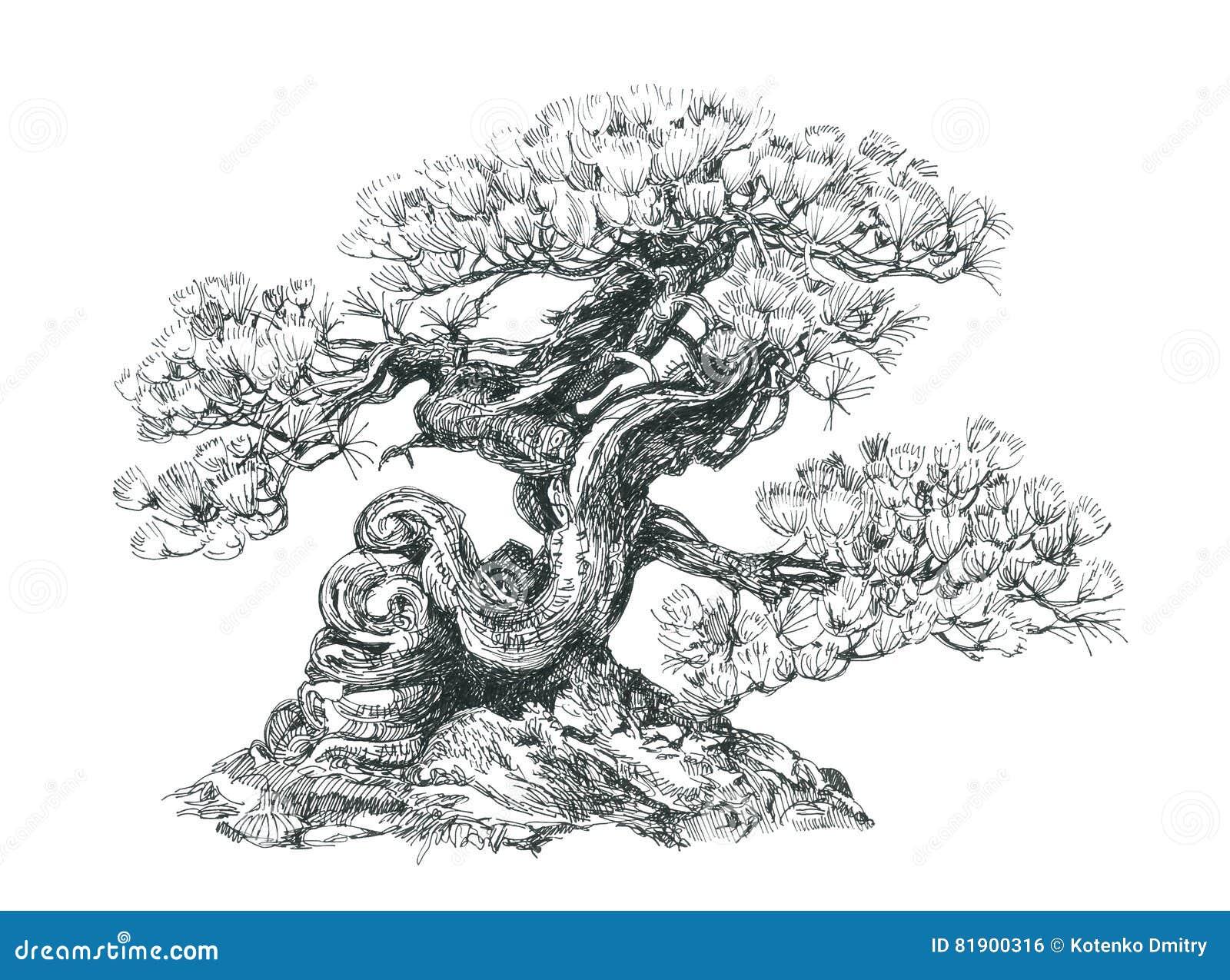 bonsai  coniferous   black and white   stock illustration