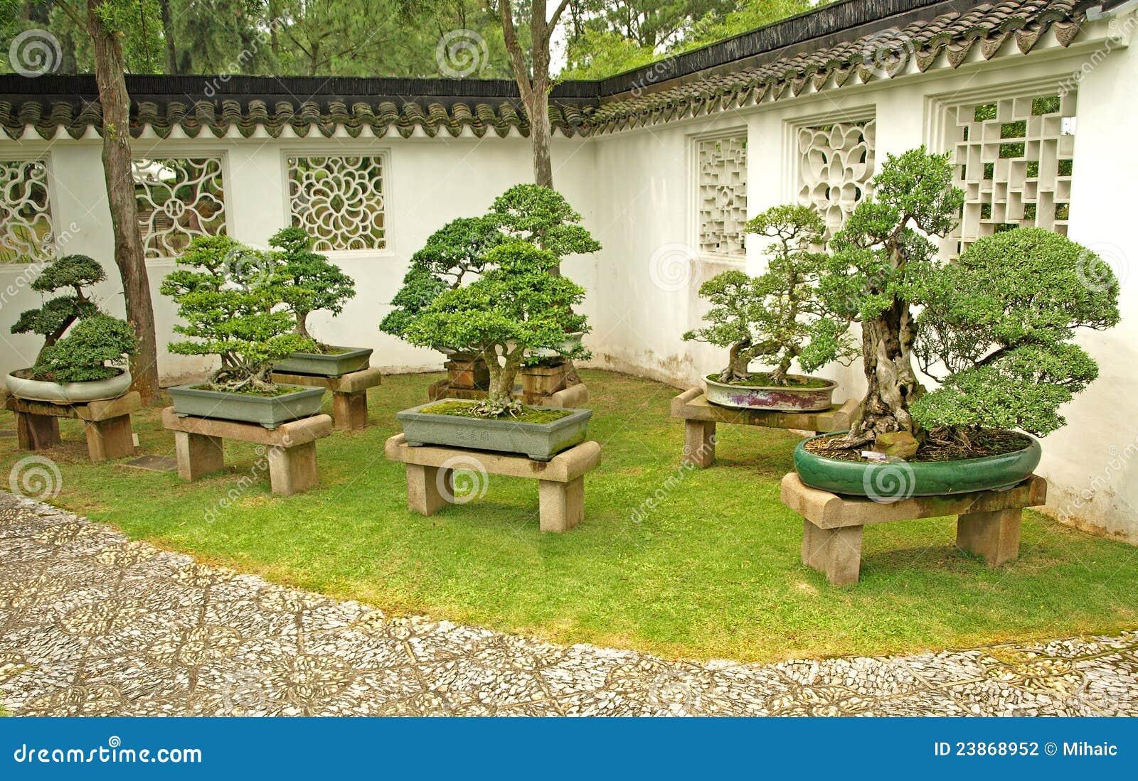 Bonsai On Display Stock Photo Image Of Buddha Nature