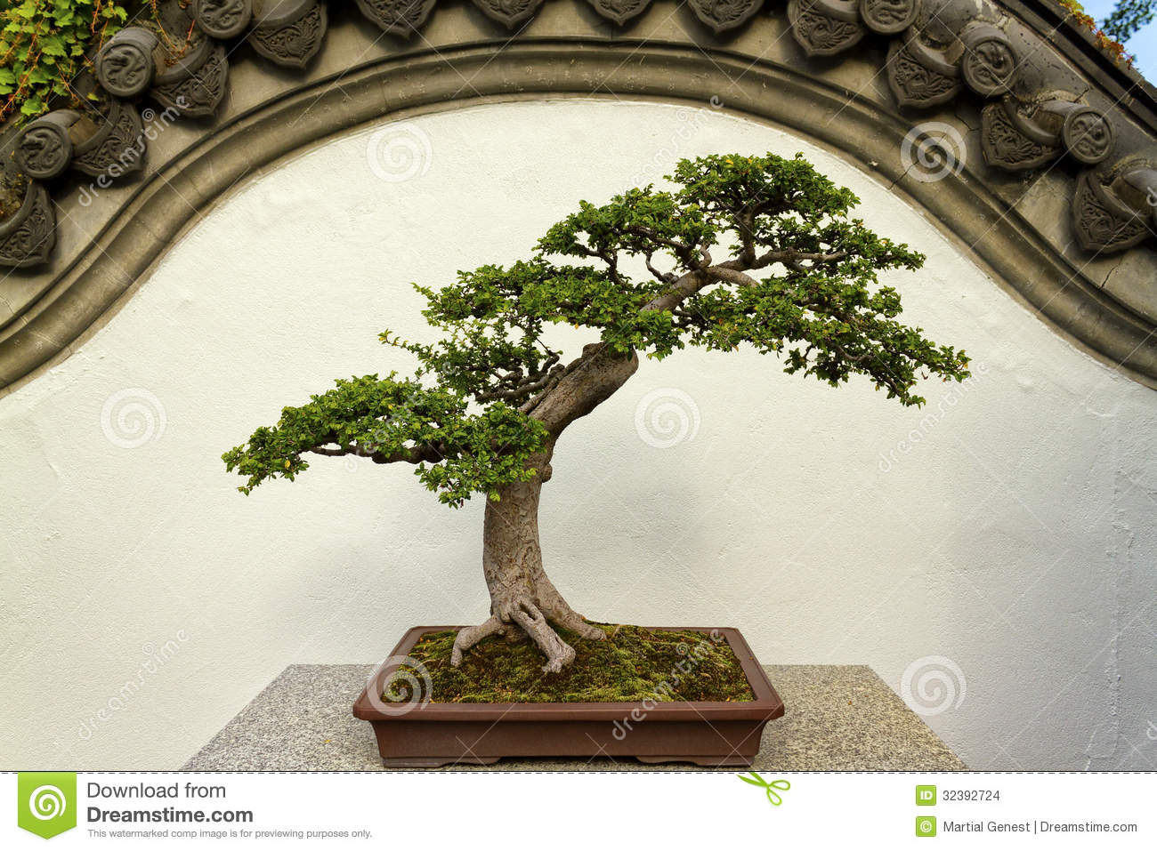 Charmant Isolated Bonsai In A Chinese Garden Decor