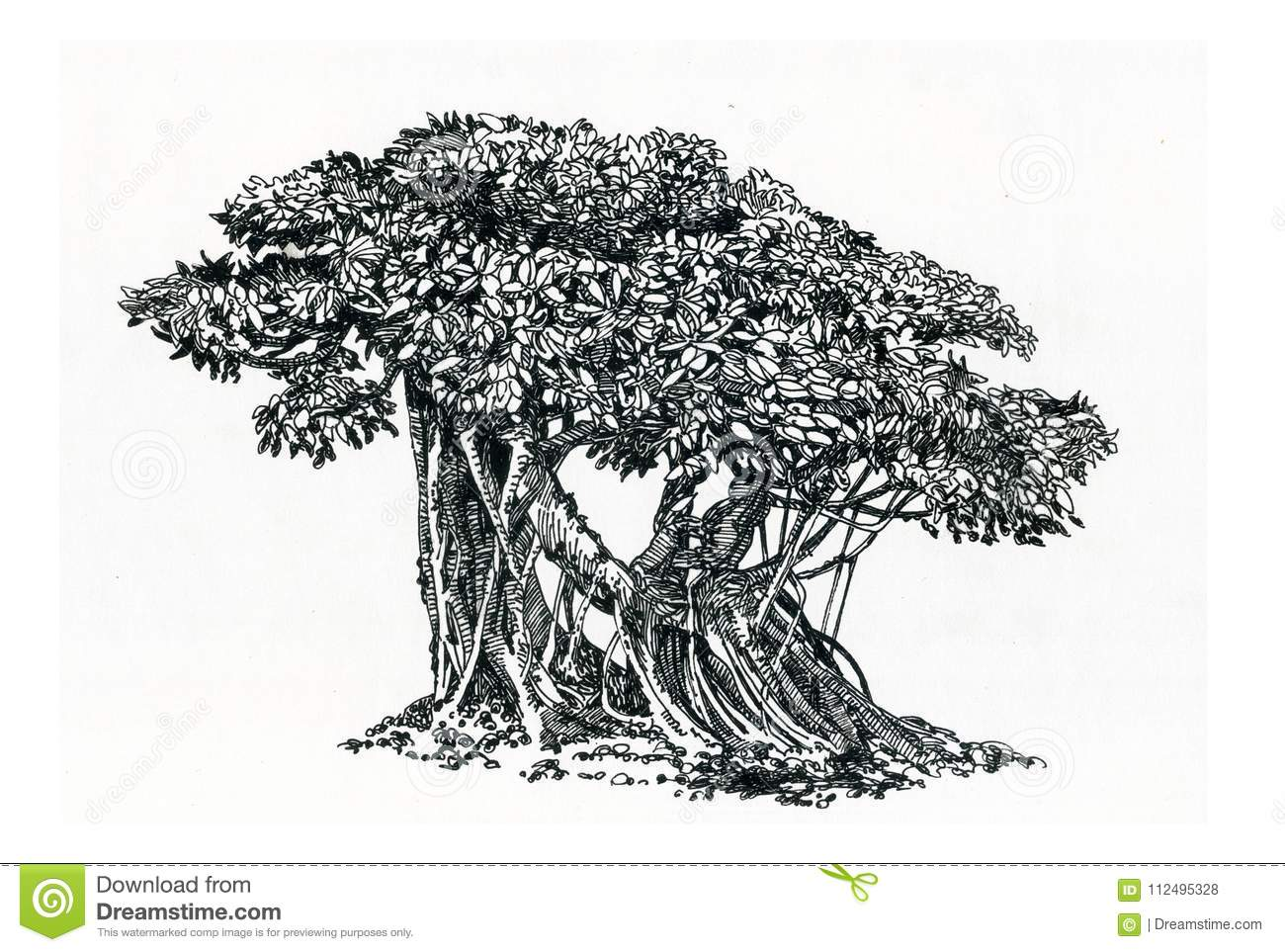 Bonsai Old Tree Ficus With Aerial Roots Stock Illustration