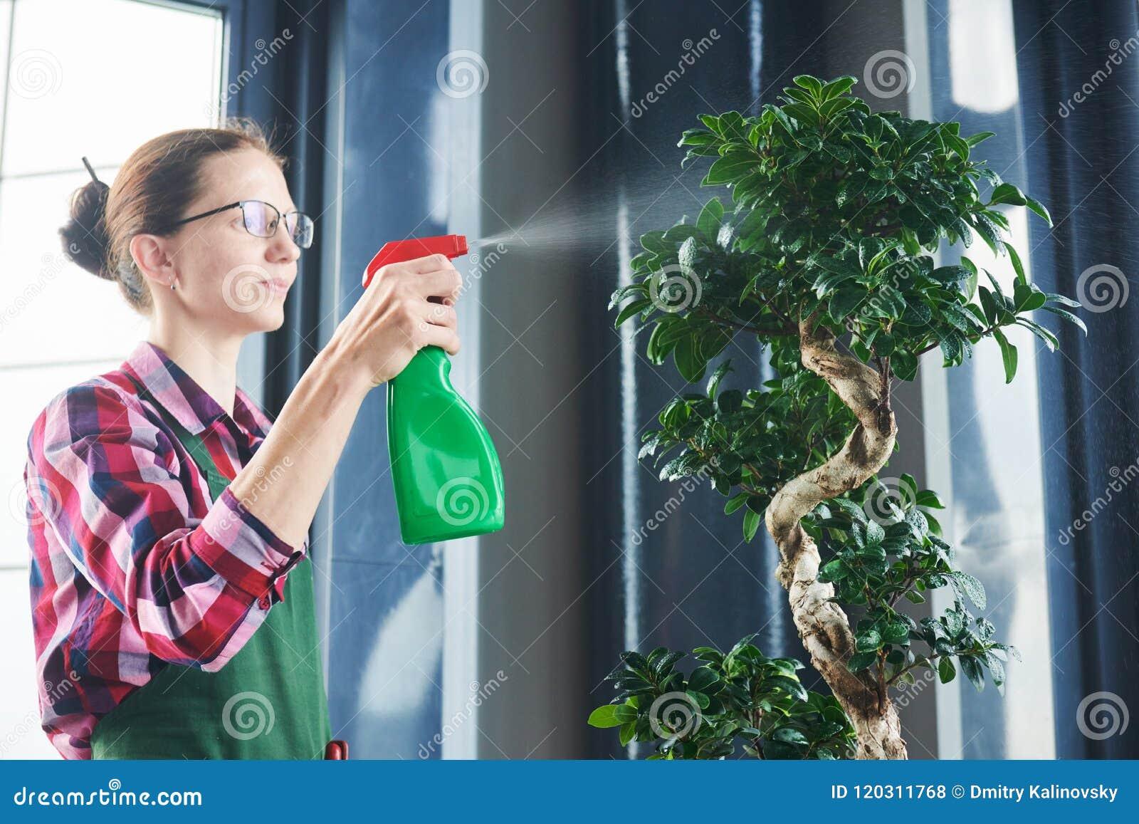 Bonsai opieka i obrządzania houseplant przyrost Nawadniać małego drzewa