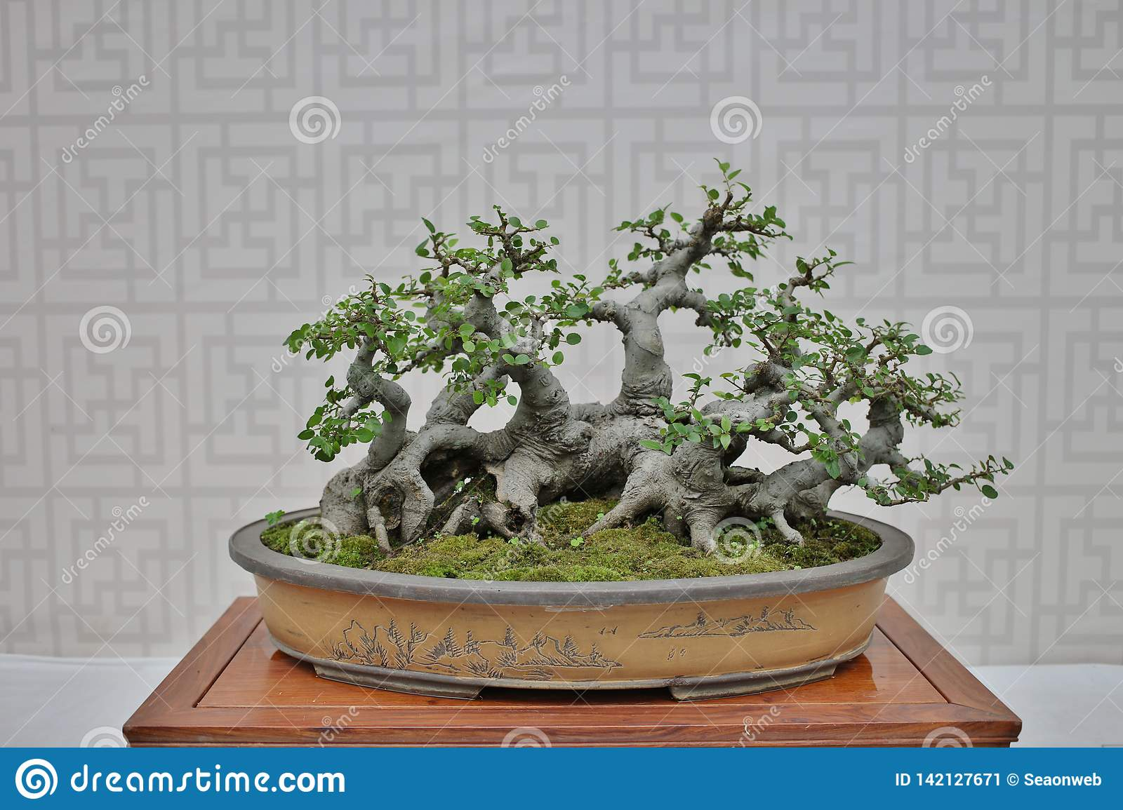 Bonsai And Penjing Landscape With Miniature Stock Image Image Of Garden Houseplant 142127671