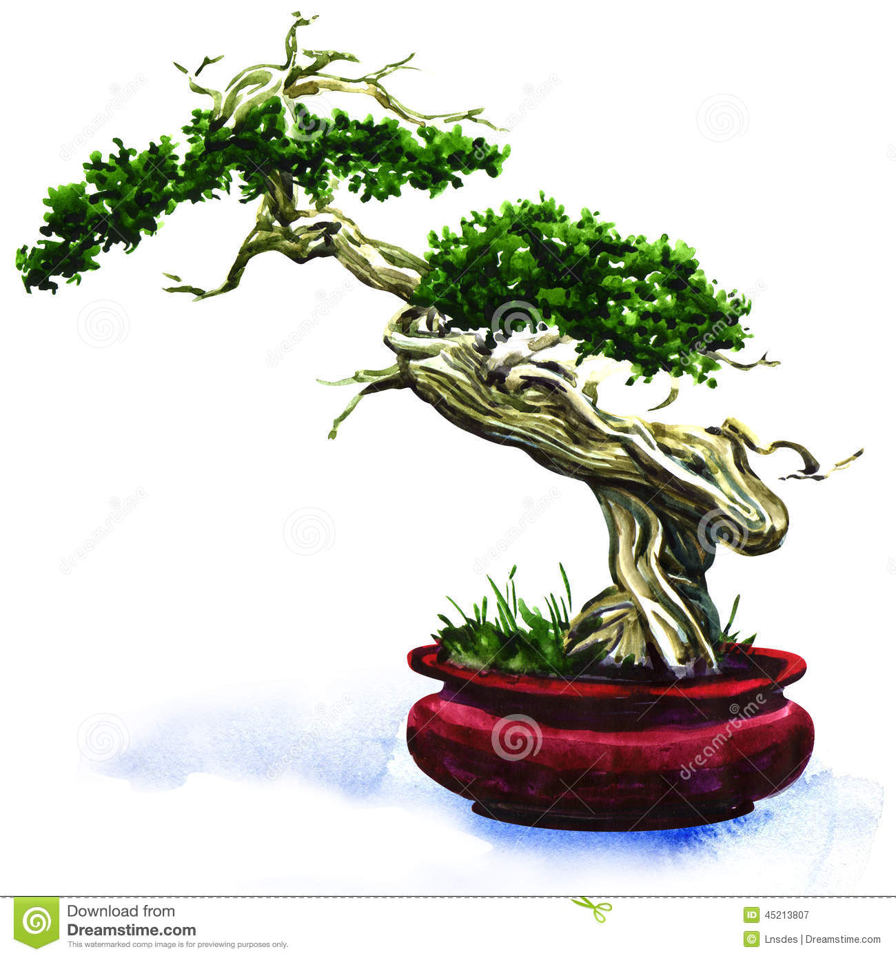Bonsai Pine Tree Isolated Stock Illustration Illustration Of Isolated 45213807