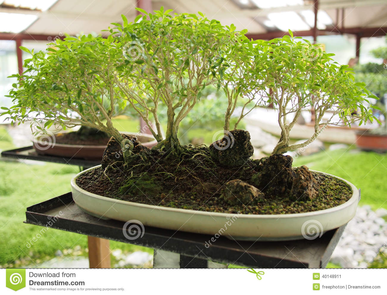 2 458 Bonsai Forest Photos Free Royalty Free Stock Photos From Dreamstime