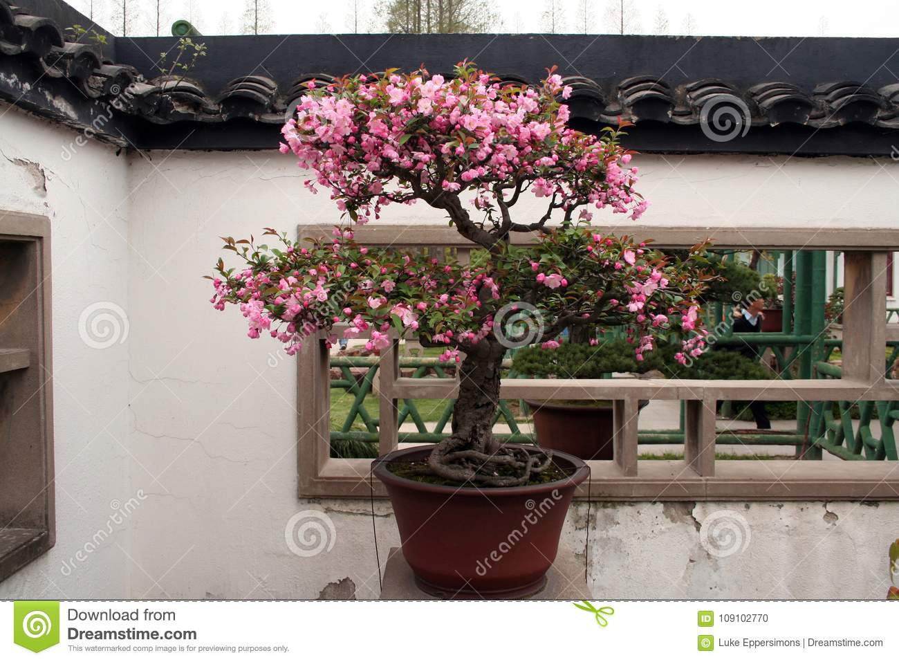 Bonsai Tree With Green Leaves And Pink Flowers Stock Photo Image