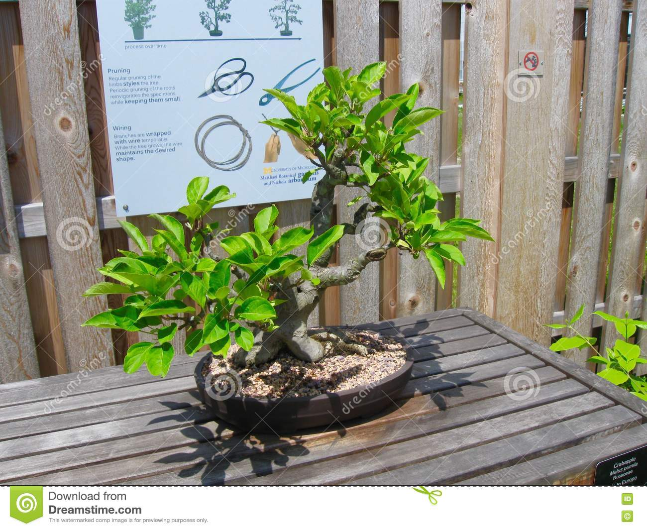 Bonsai Tree Editorial Photography Image Of Pebbles Sunny 73346892 Wiring In Download