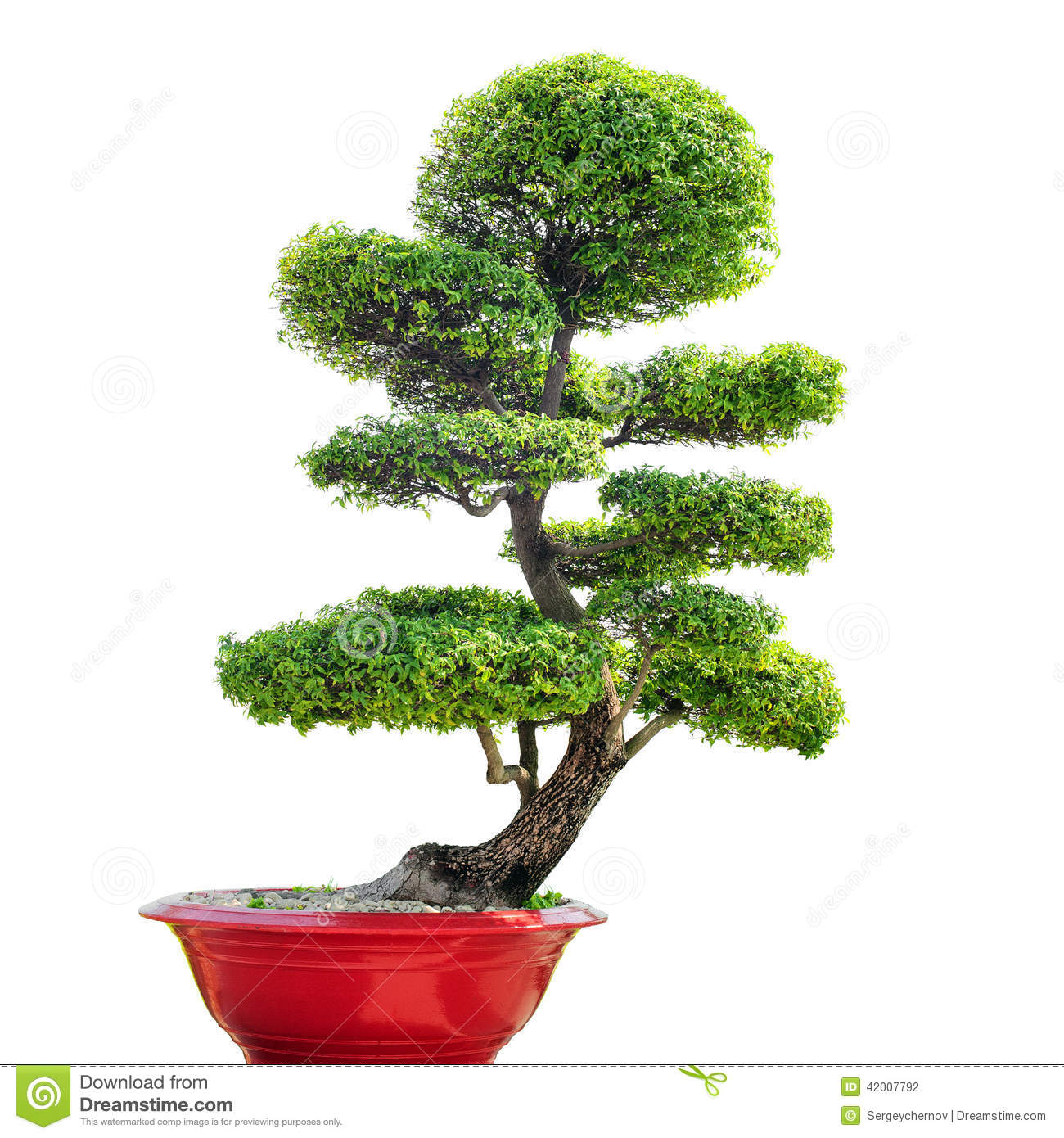 Bonsai tree isolated on white background stock photo for Typical japanese garden plants