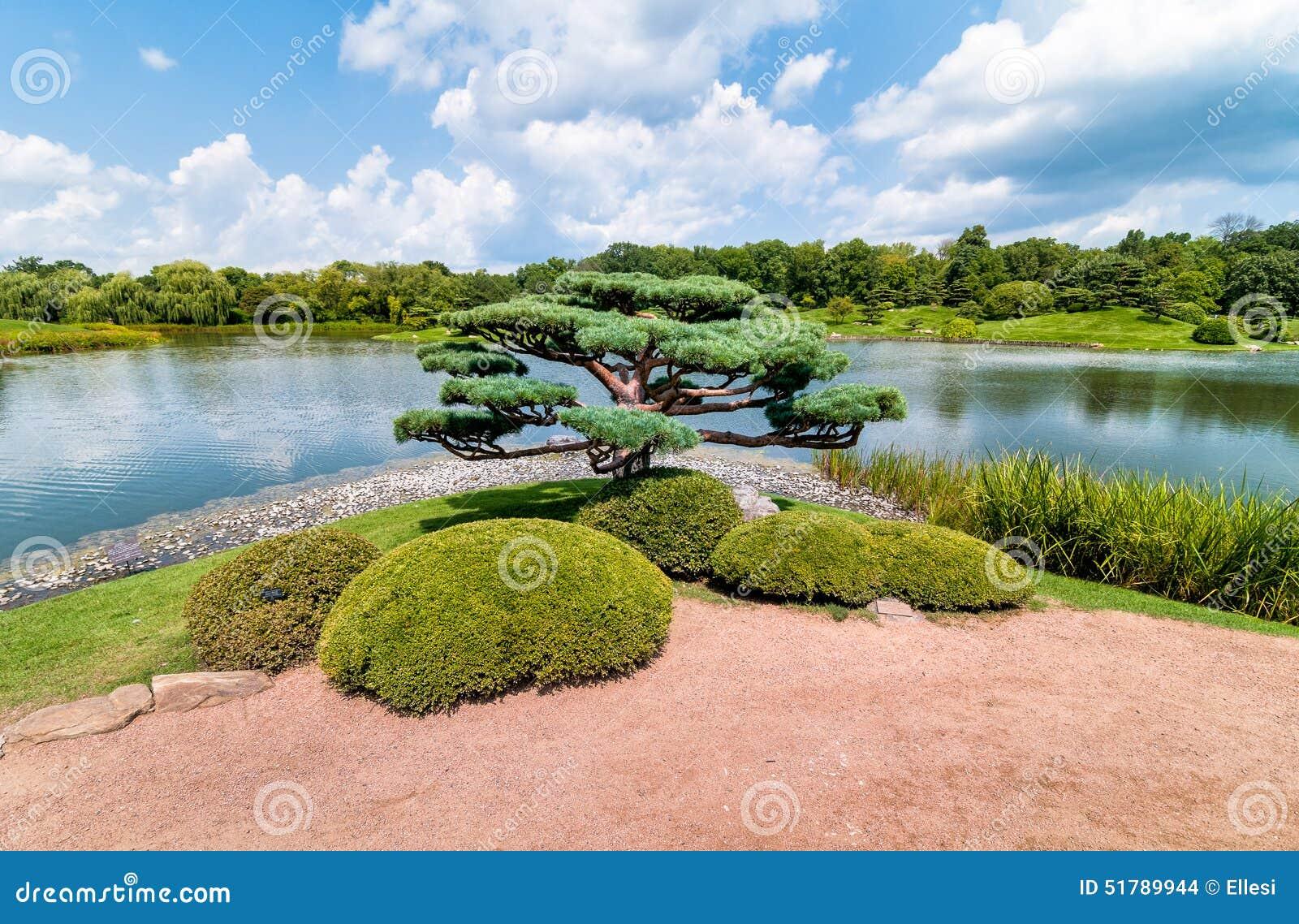 bonsai tree in the japanese garden of chicago botanic garden stock