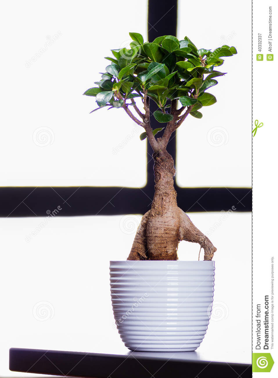 Bonsai Tree On A Office Table Stock Photo Image 40332337