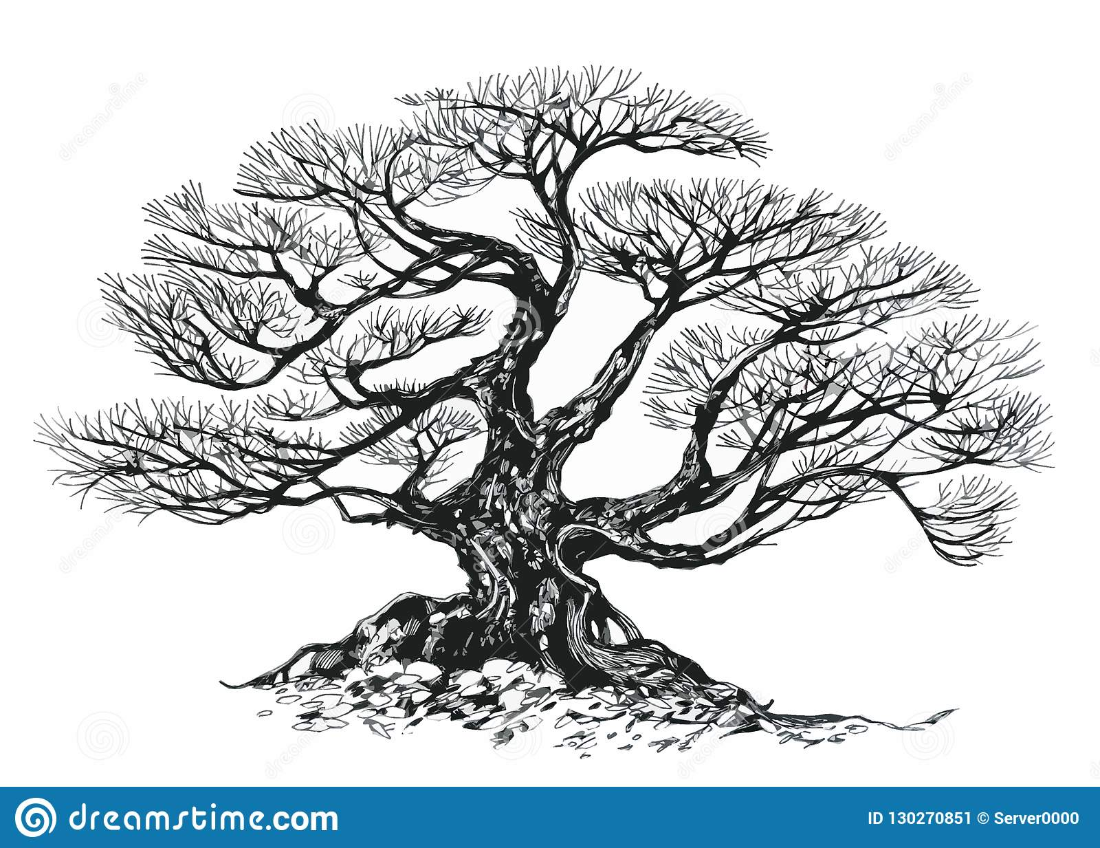 Bonsai Tree Old Tree Drawing Ink Stock Illustration Illustration Of Plant Lush 130270851