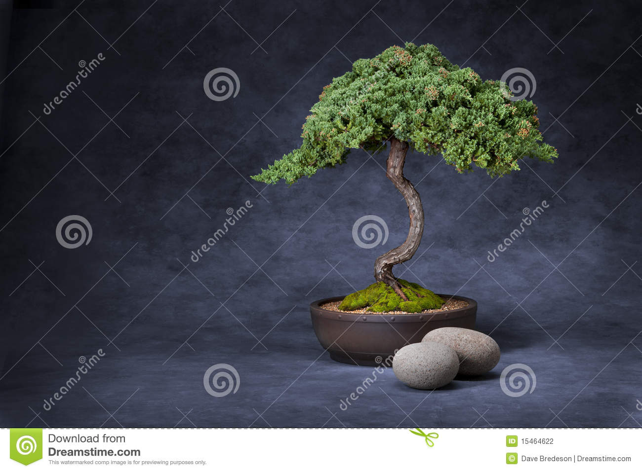 Download Bonsai Tree And Stones Background Stock Photo - Image of oriental, calming: 15464622