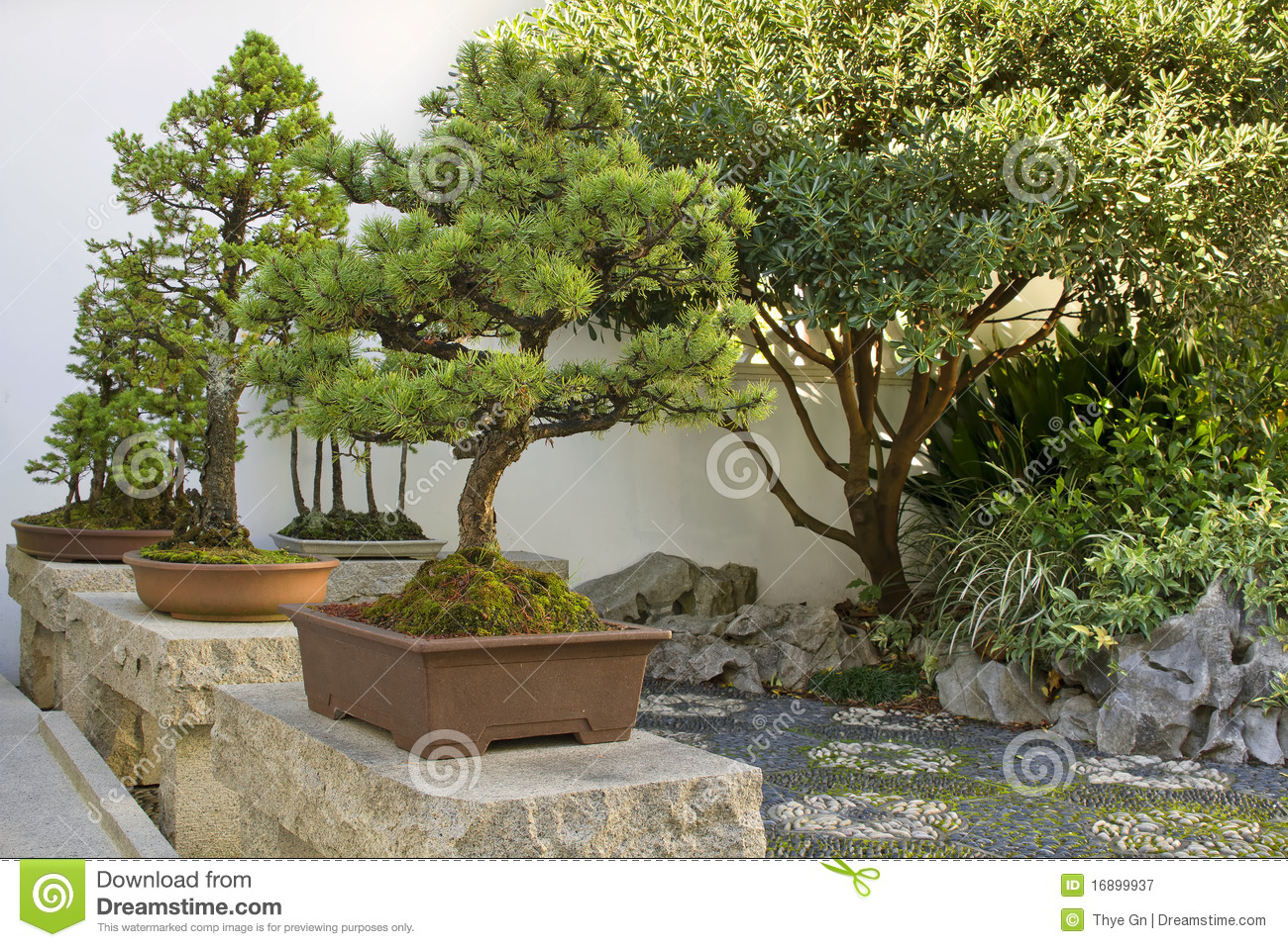 Bonsai trees in chinese garden stock image image 16899937 for Jardin chinois miniature