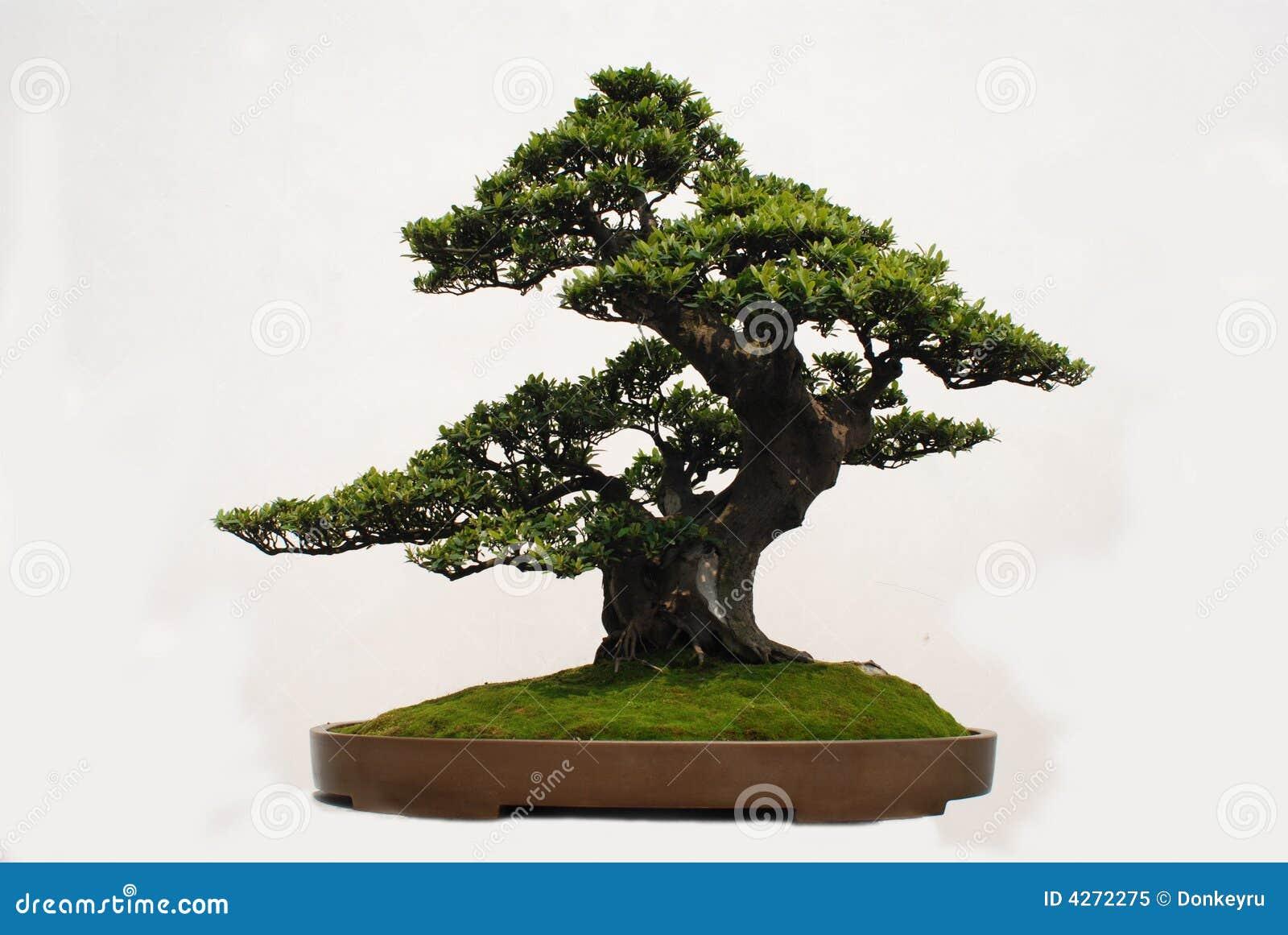 Bonsai of Yaccatree