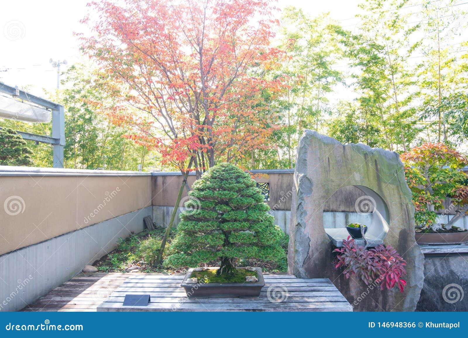 Bonsais del ciprés de Hinoki en pueblo de los bonsais de Omiya