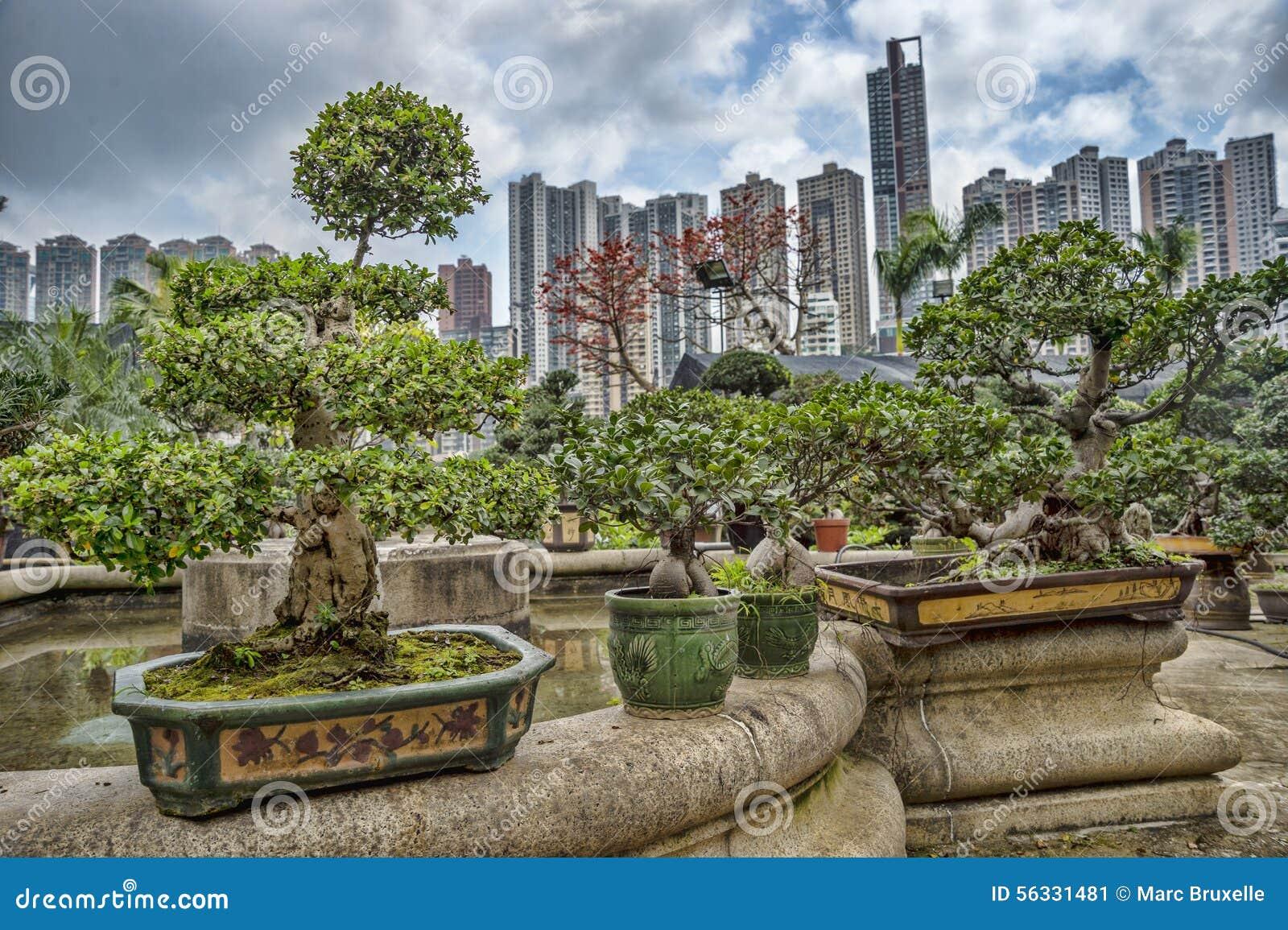 Bonsais in einem Garten