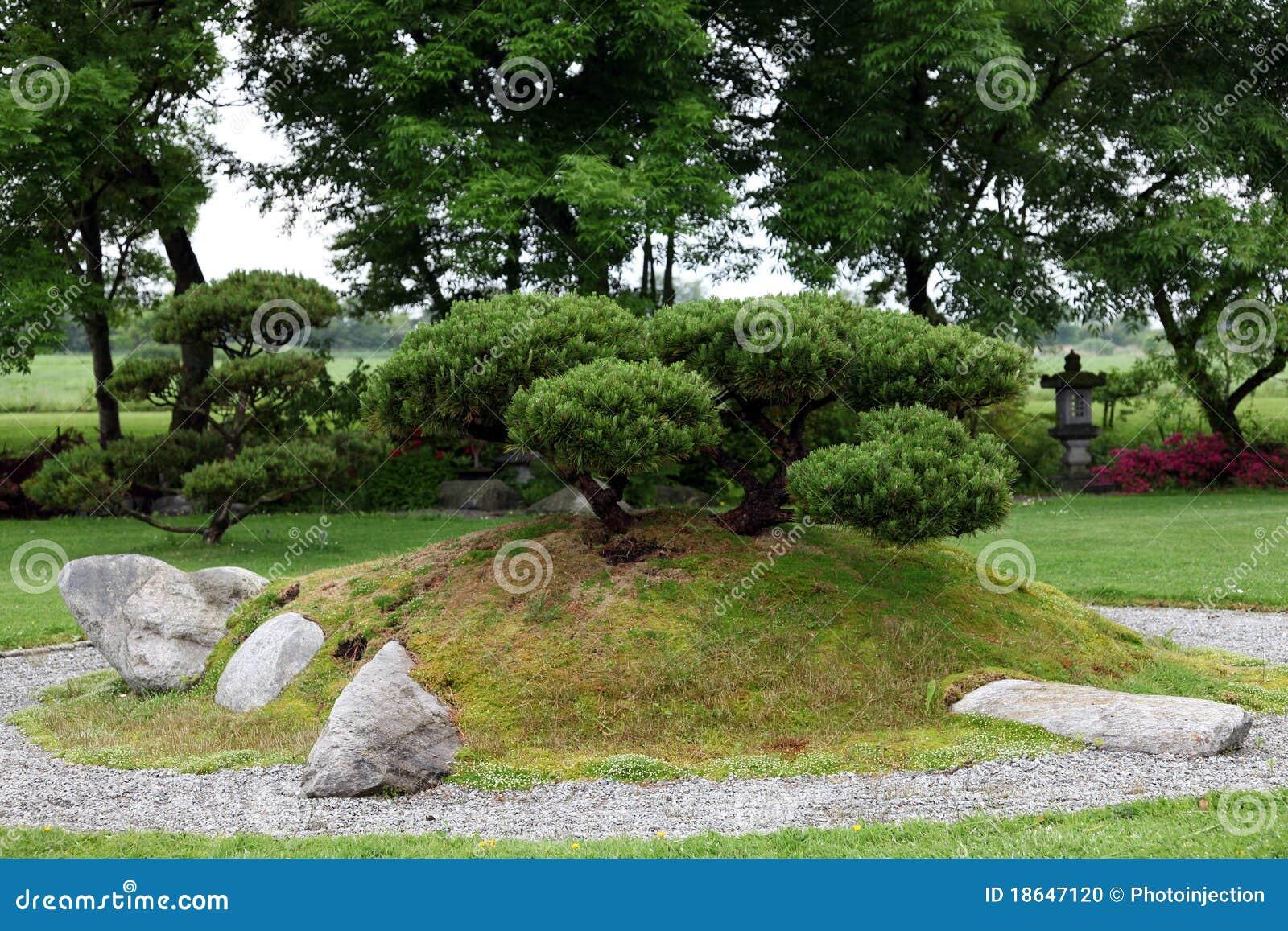bonsais im chinesischen steingarten stockfoto bild von. Black Bedroom Furniture Sets. Home Design Ideas