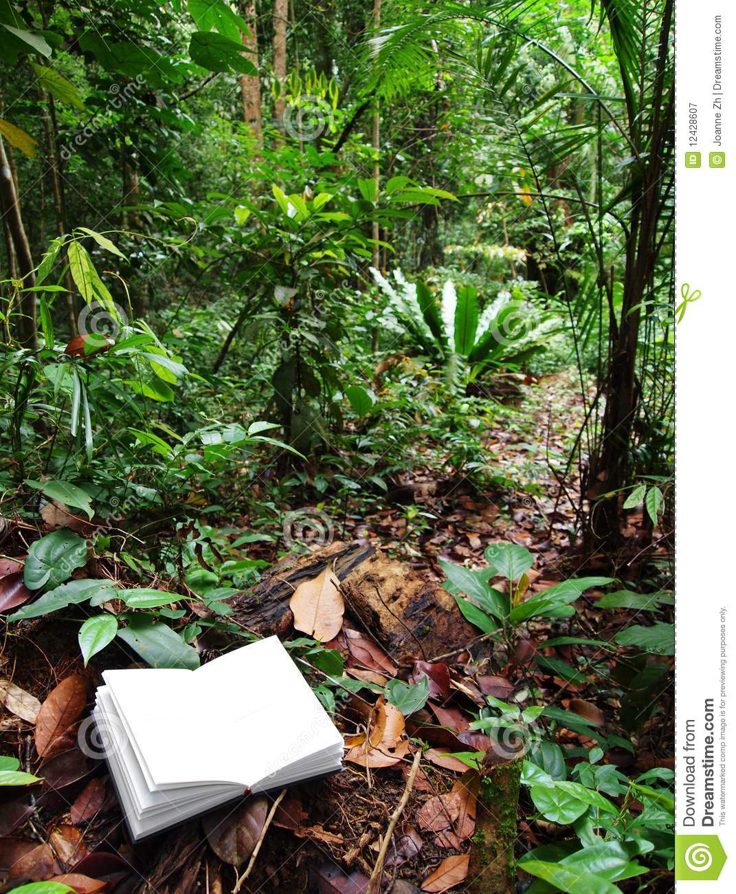 book in tropical rainforest background stock image image of