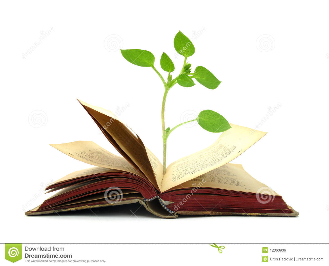 4b71c8053620a Books Old Vintage With Plant Growing From It Stock Photo - Image of ...