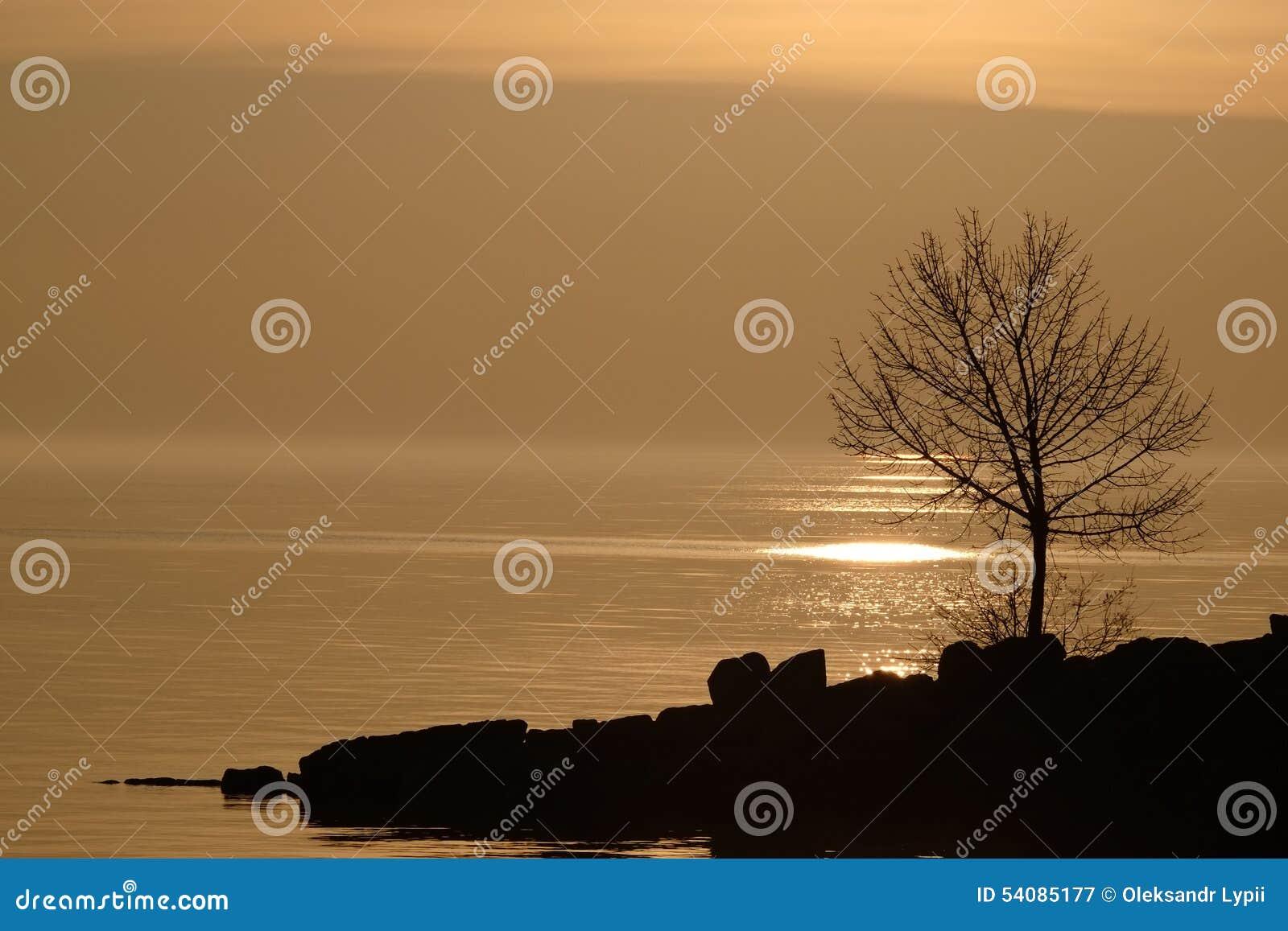 Boom bij zonsondergang