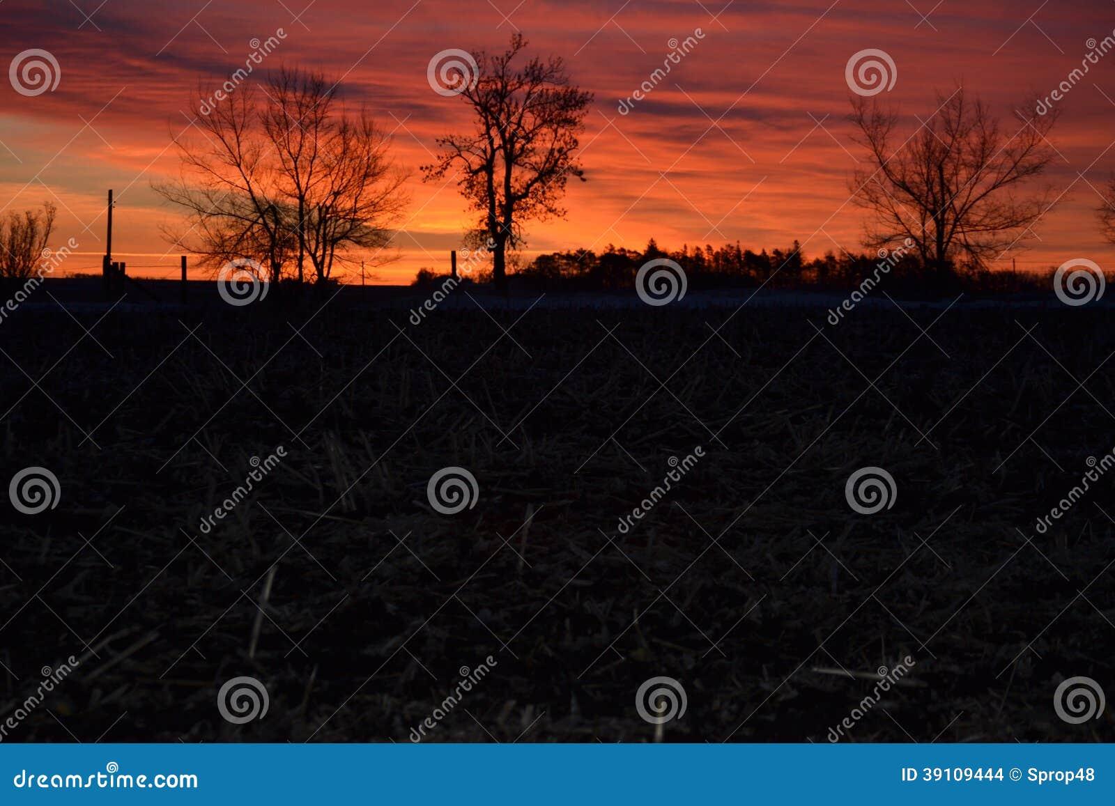 Boom die met de zonsopgang wekken