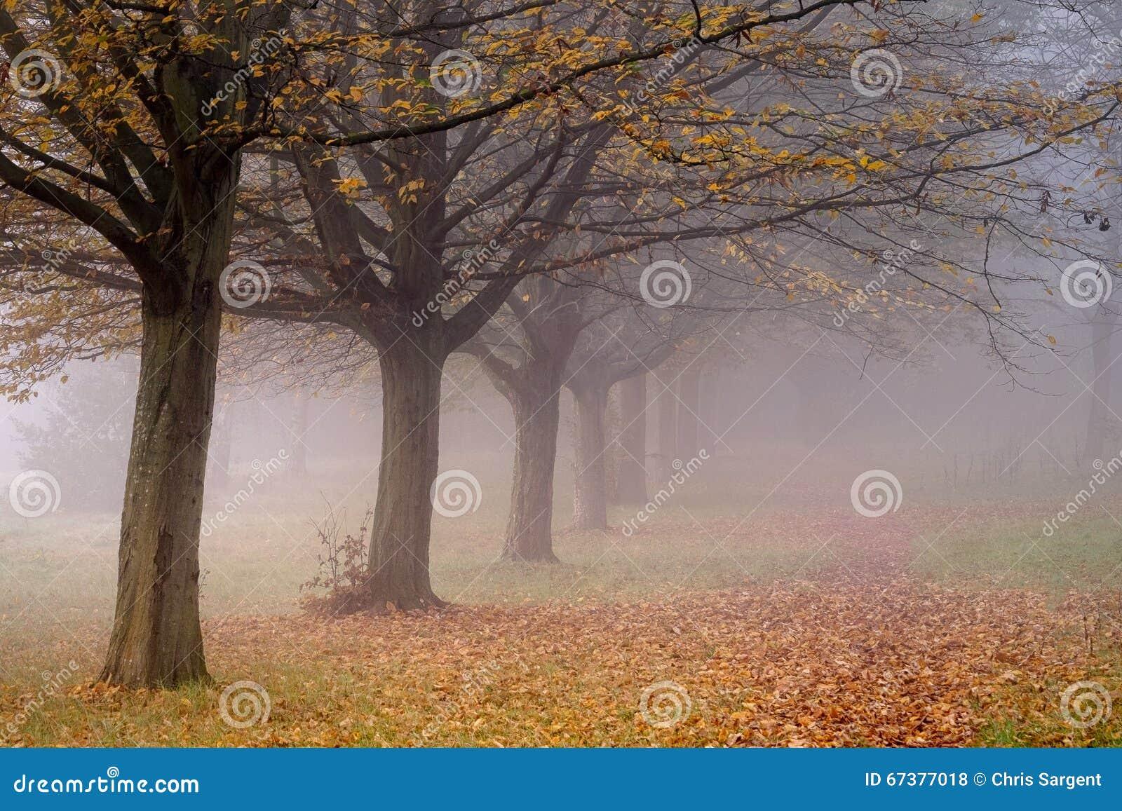 Boom gevoerde weg in de mist