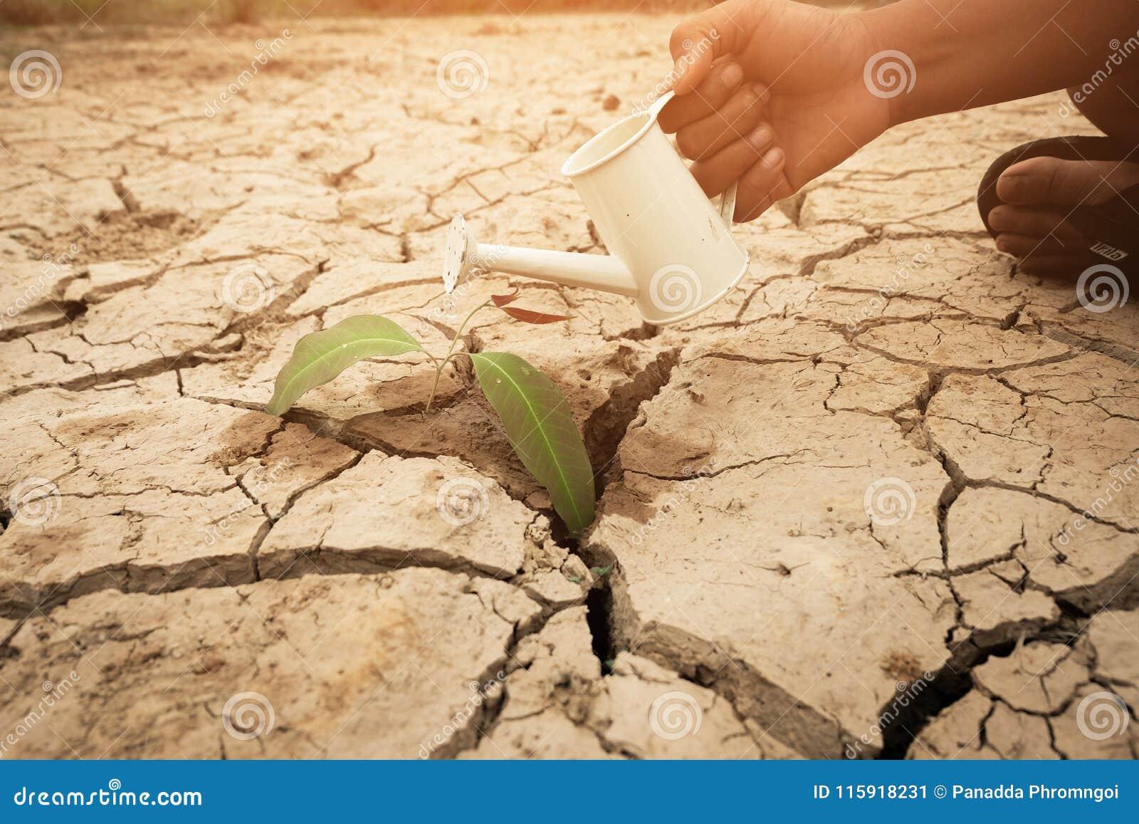 Boom het groeien op gebarsten grond Barst droge die grond in droogte, van globale verwarmende gemaakte klimaatverandering wordt b
