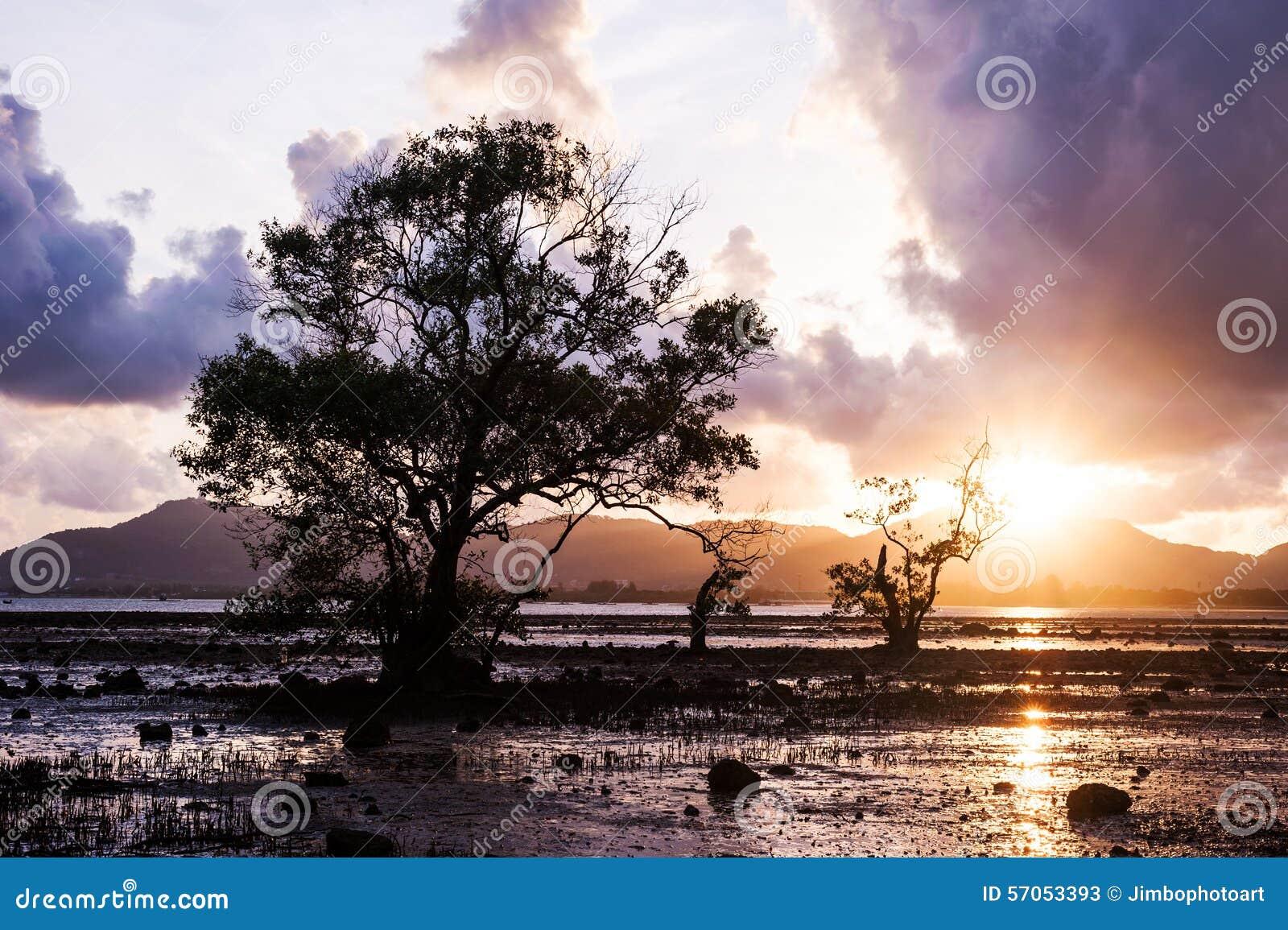 Boom in het overzees met kleur van zonsondergang en onweerswolk