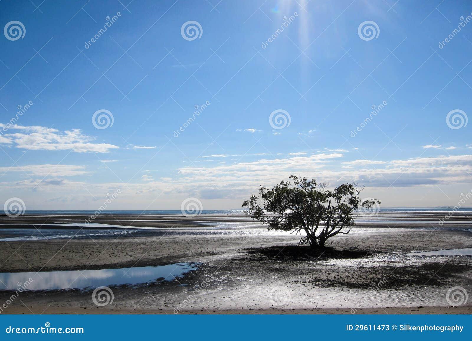 Boom op mudflats