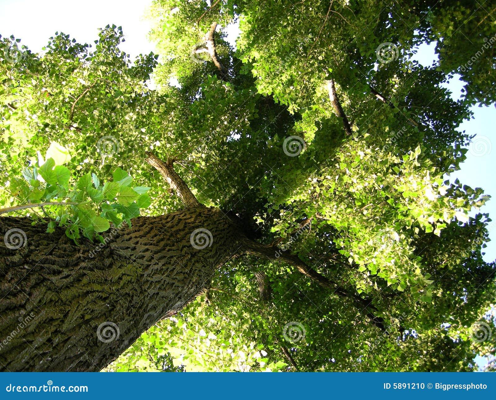 Boom van de milieu de groene planeet