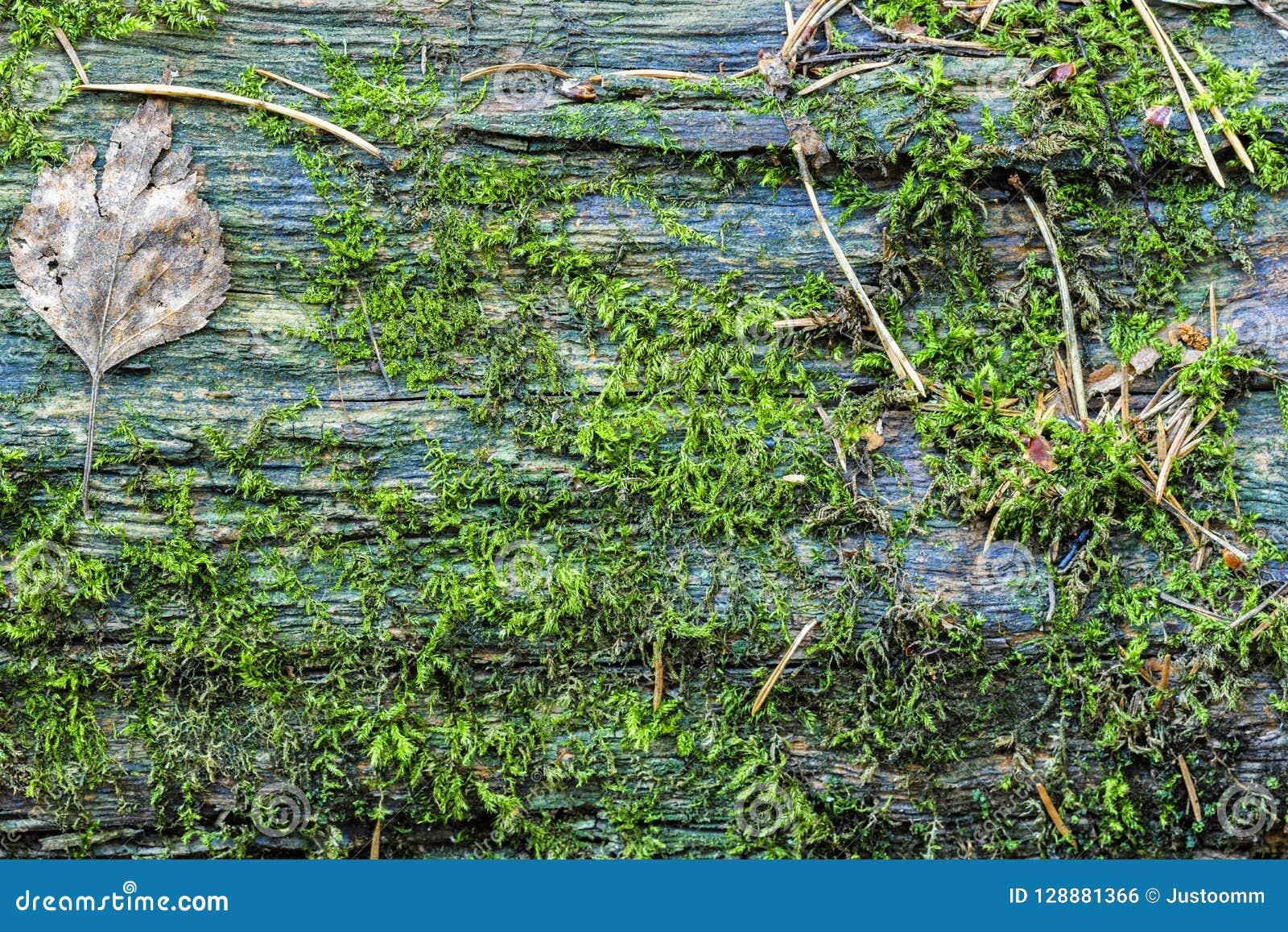 Boomboomstam met textuur van de mos de Horizontale foto