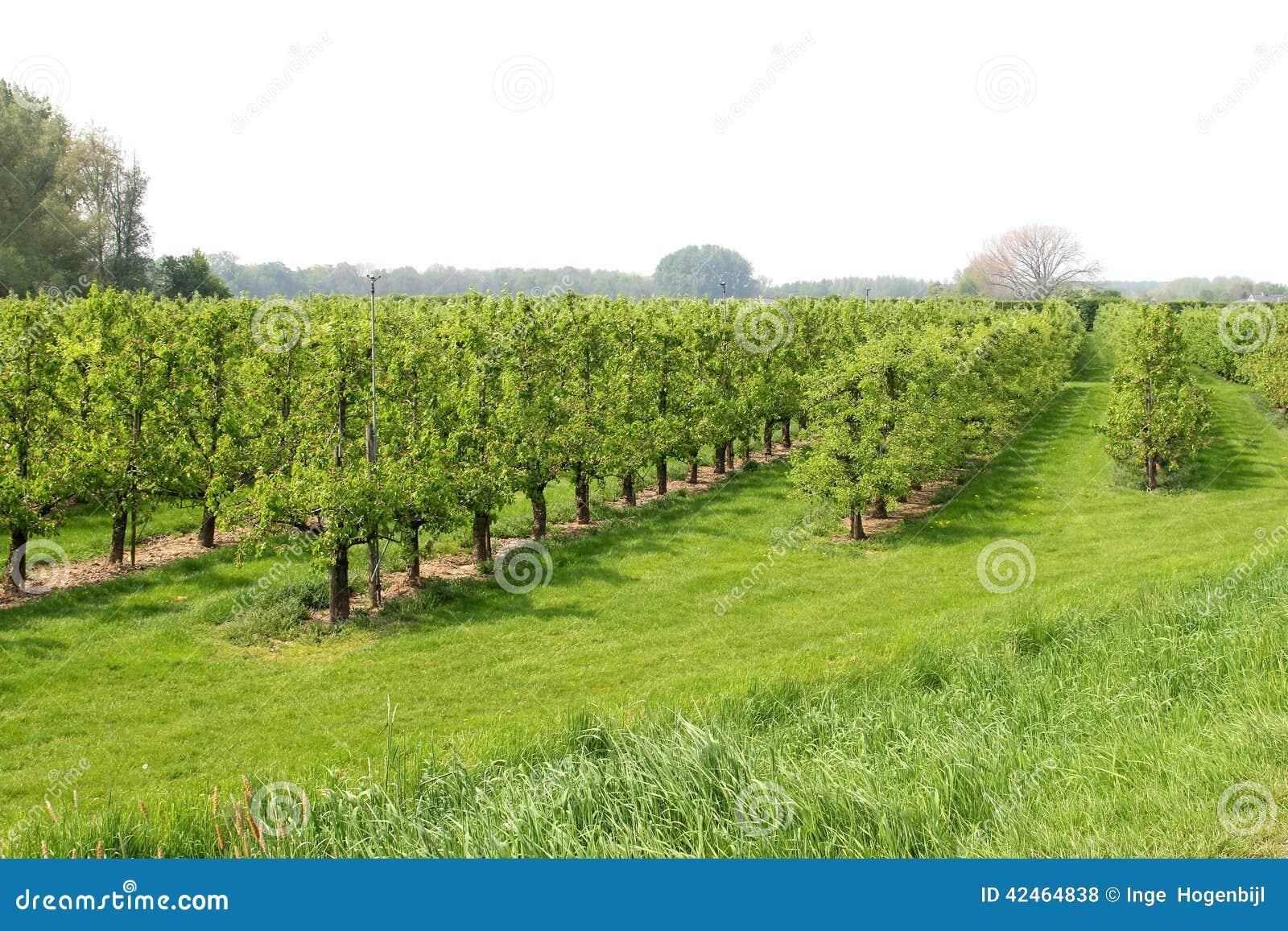 Boomgaard met fruitbomen, Nederland