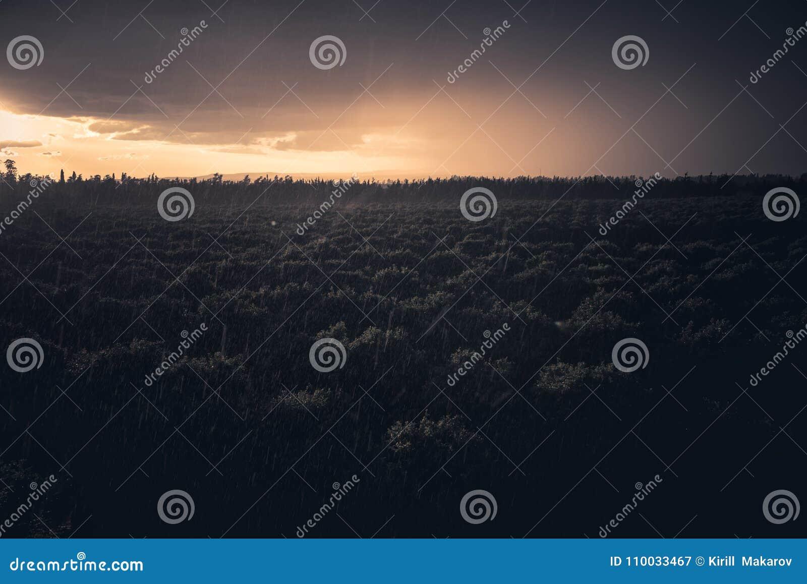 Boomgaard onder regen bij zonsondergang